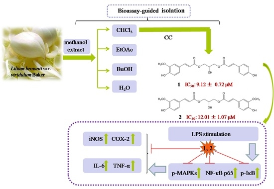 Bioassay-Guided Isolation of Anti-Inflammatory Components from the Bulbs of Lilium brownii var. viridulum and Identifying the Underlying Mechanism through Acting on the NF-κB-MAPKs Pathway