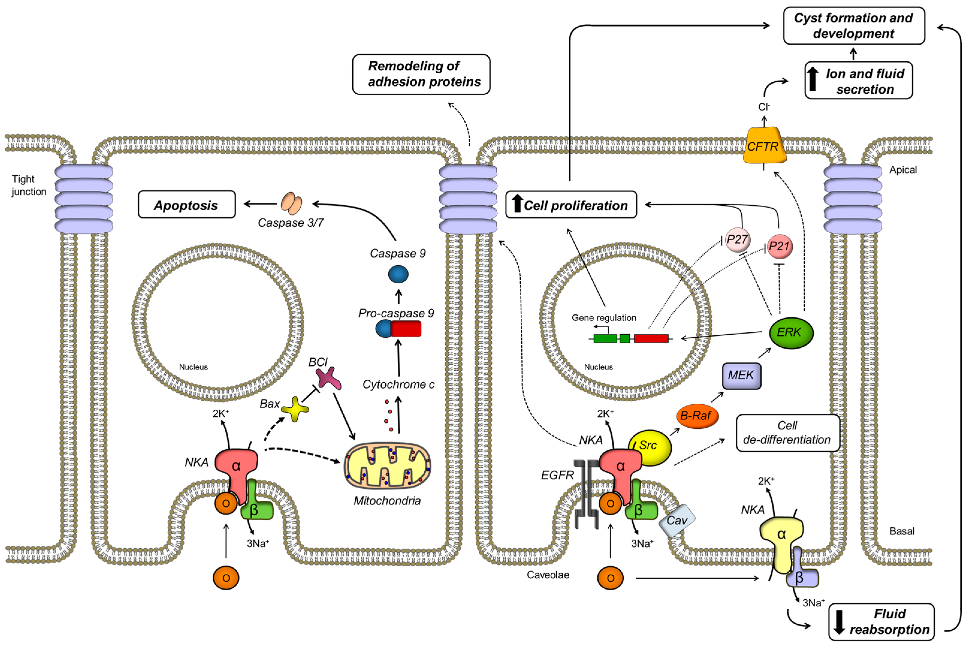 mechanism of disease genetics x clicics essay Neurological channelopathies: new insights into disease mechanisms and ion channel function  genes underlie the genetics of such neurological diseases identifying .