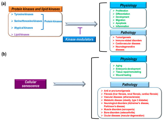 Molecules | Free Full-Text | The Role of Kinase Modulators