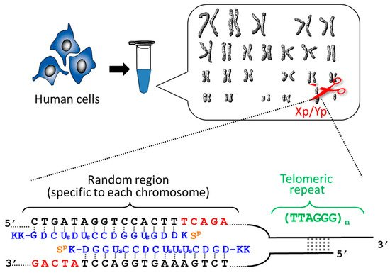 when an rna strand forms using dna as a template - molecules special issue molecular properties and the