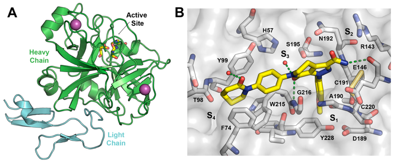 Molecules | Free Full-Text | Novel FXa Inhibitor