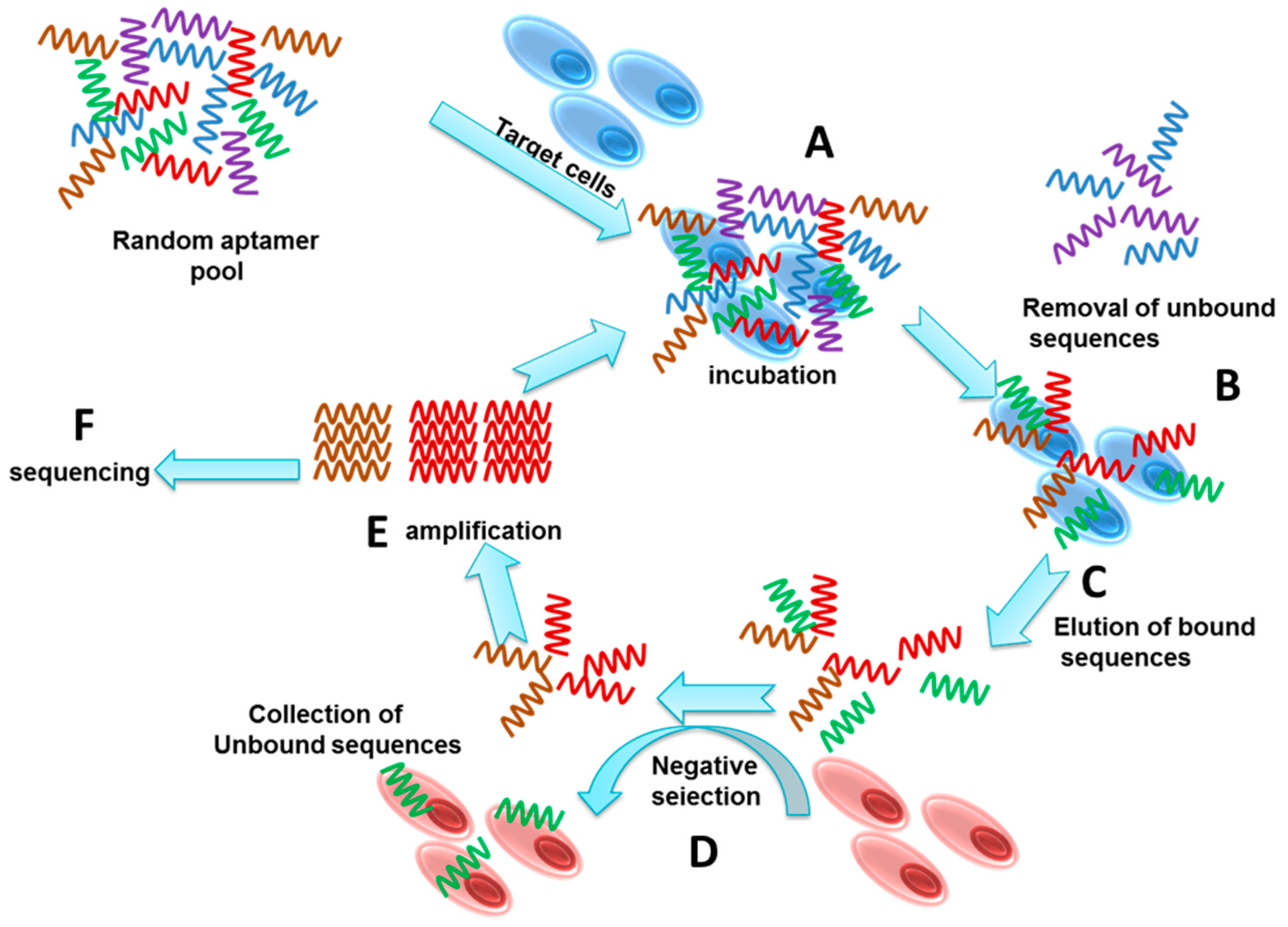 Molecules   Free Full-Text   Development of Cell-Specific Aptamers
