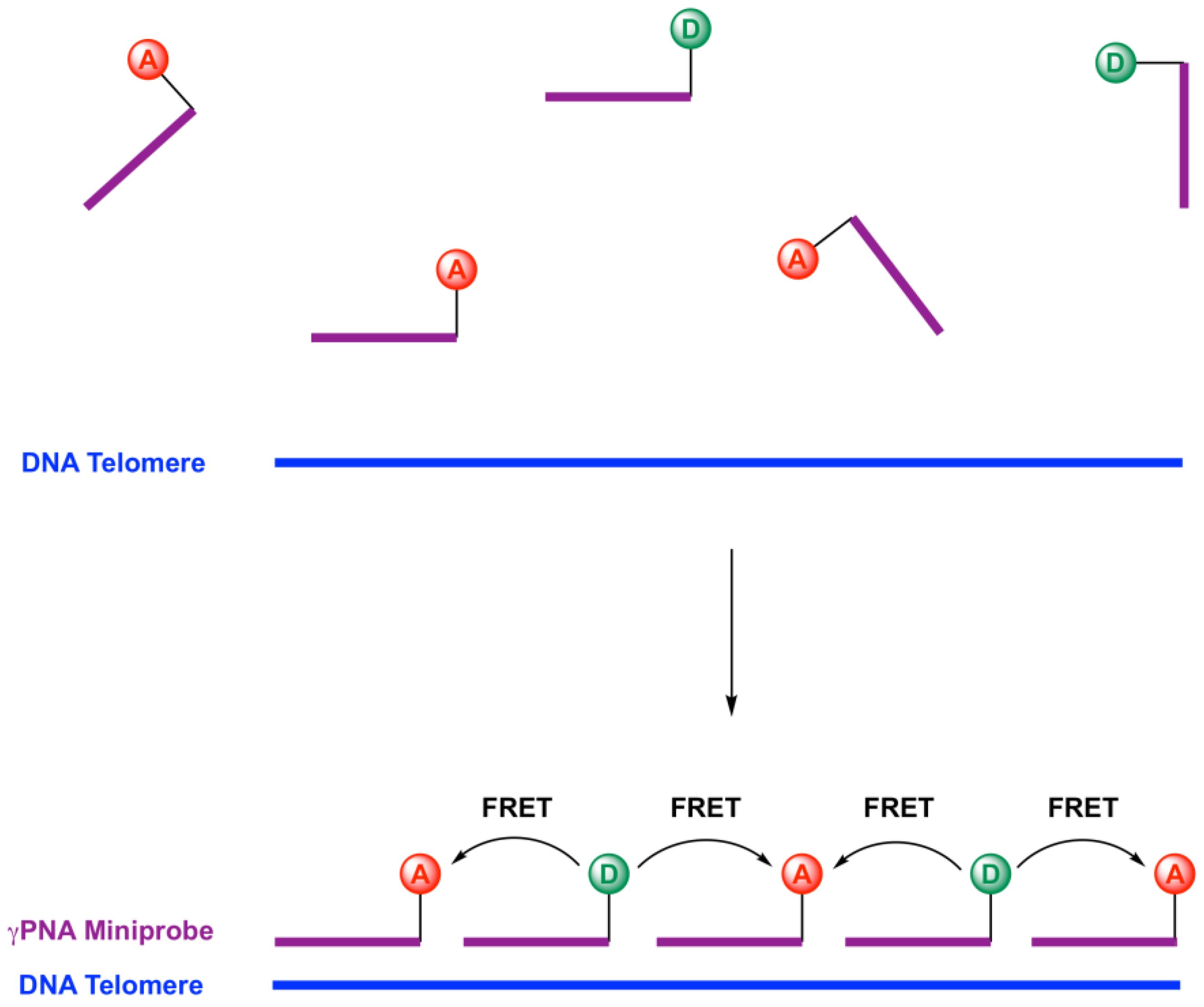 Molecules | Free Full-Text | γPNA FRET Pair Miniprobes for