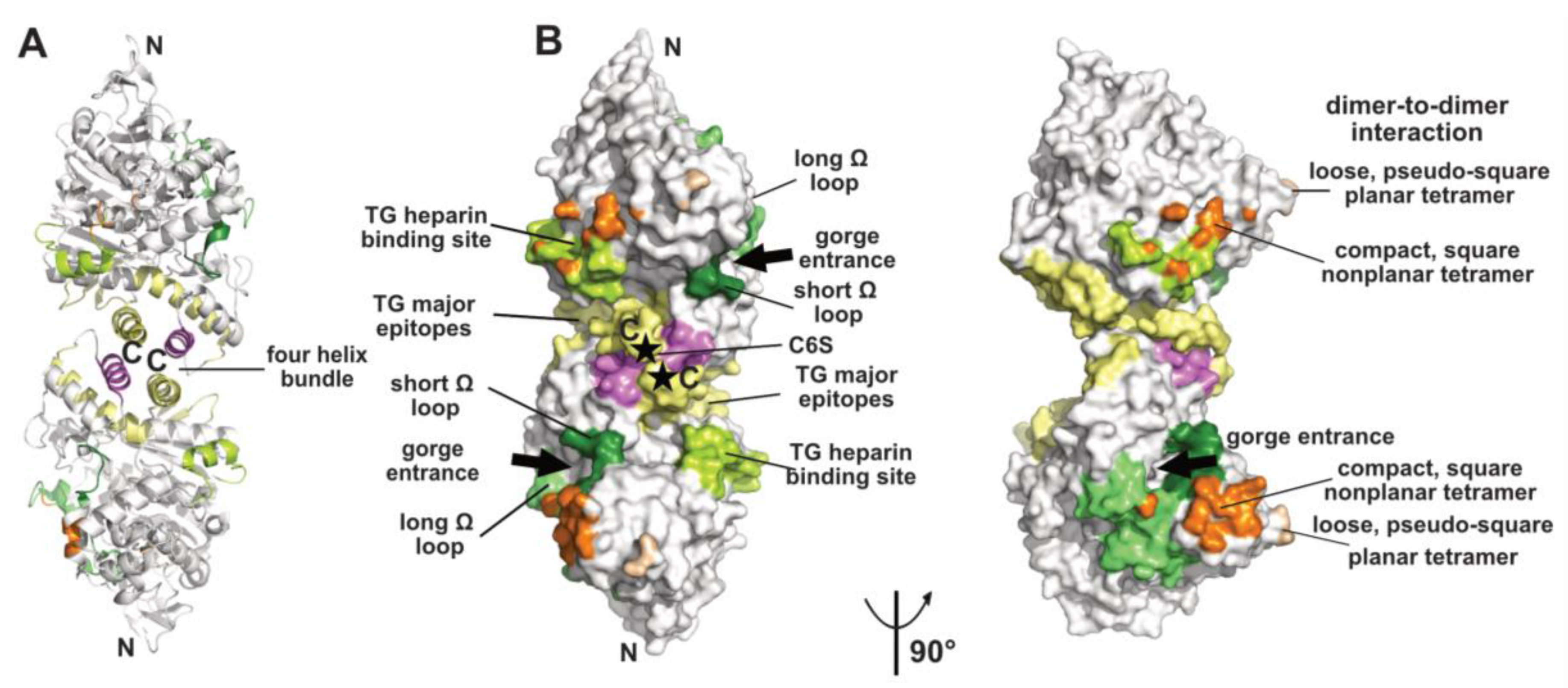 protein protein interface hot spots Multiple hot-spot regions can be found in a single interface (ma et al, 2003), these tend to cluster at the centre of the interface, and interact with equivalent hot-spot residues in the binding partner protein (halperin et al, 2004 keskin et al, 2005).
