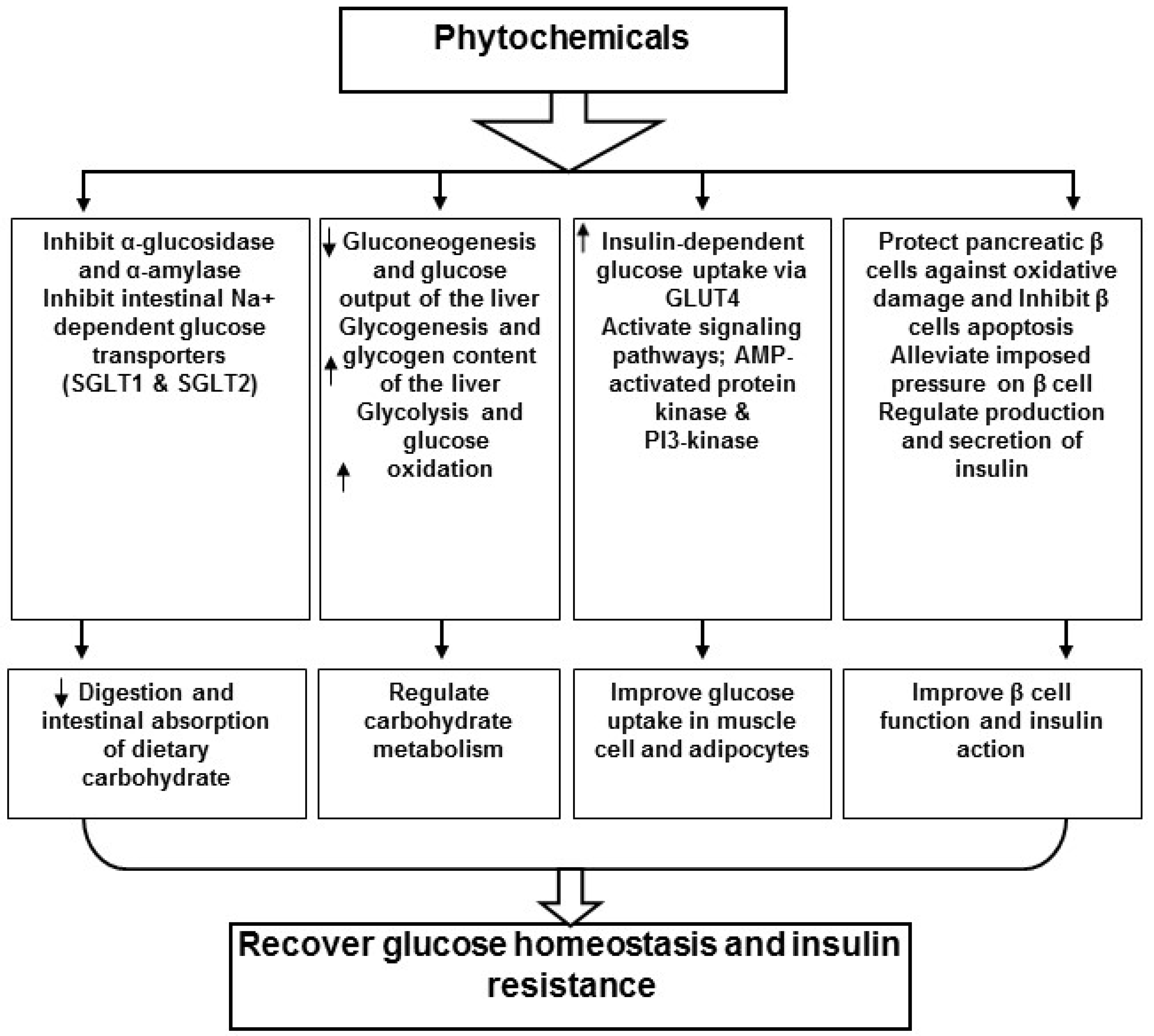 Molecules free full text action of phytochemicals on insulin molecules 23 00258 g002 falaconquin