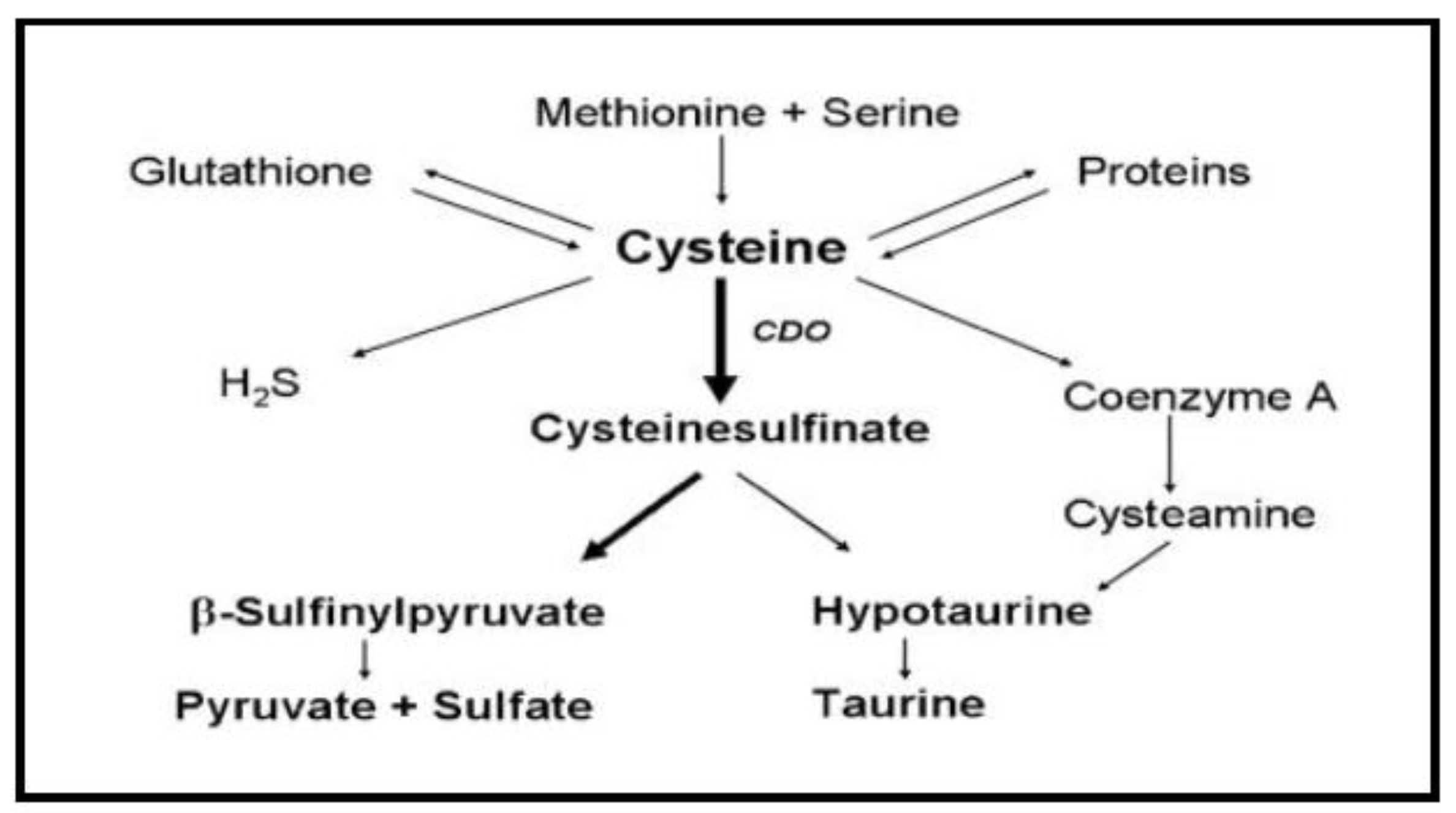molecules free full text effects of the usage of l cysteine l
