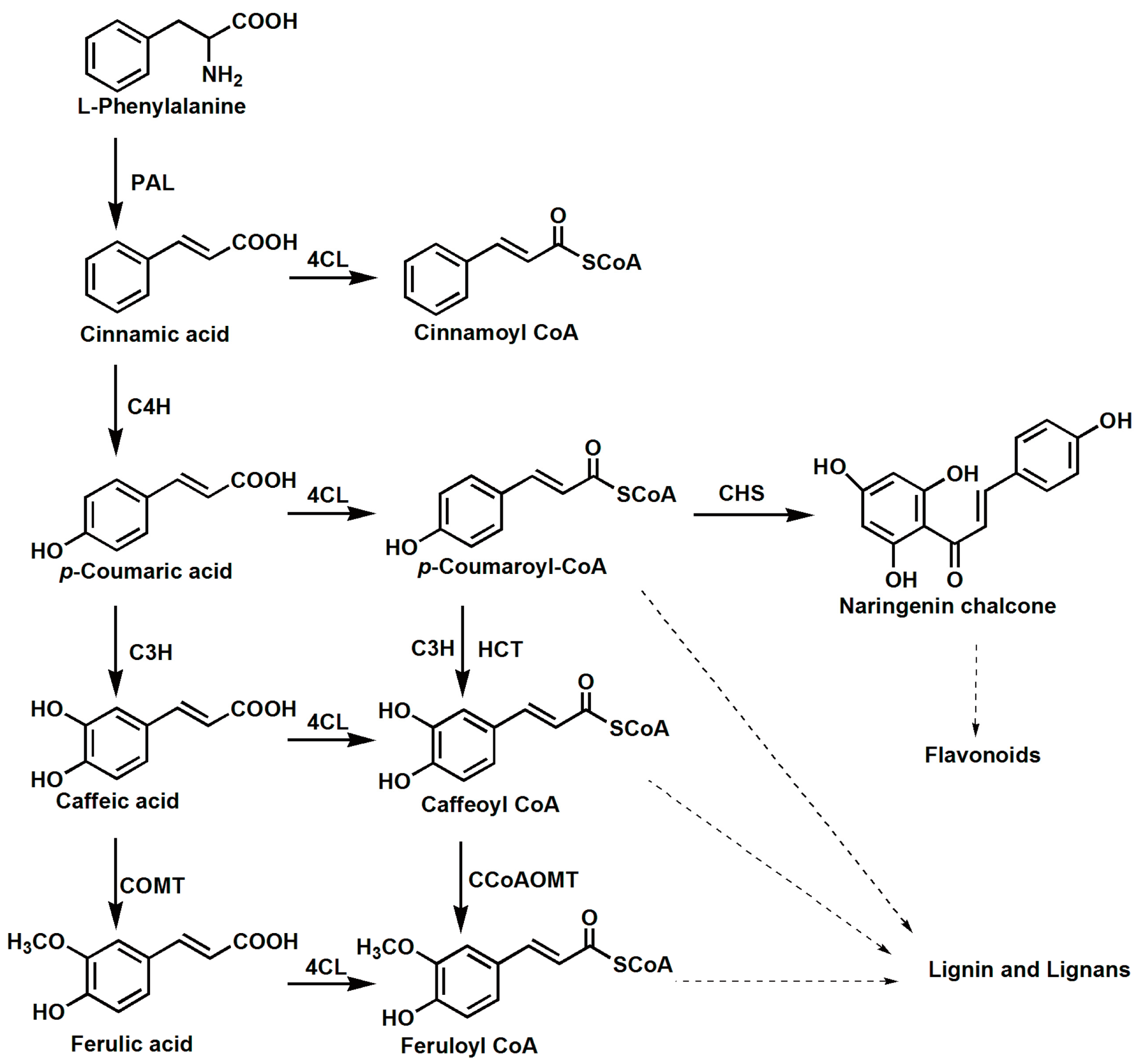 Chemical Synthesis And Properties Of Hydroxycinnamoyl Coenzyme A Derivatives