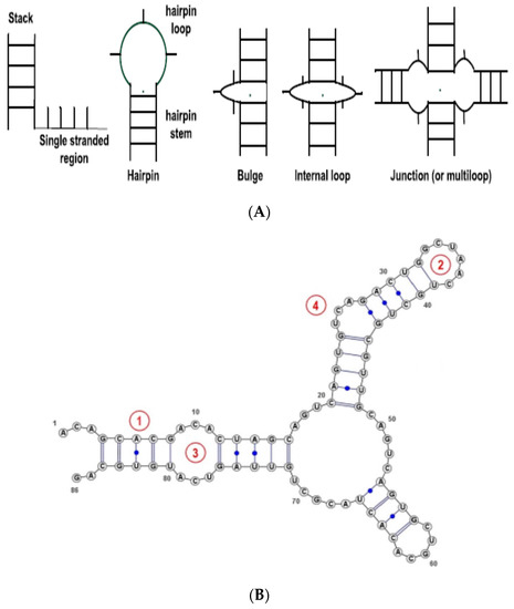 Molecules | Free Full-Text | Feature-Based and String-Based