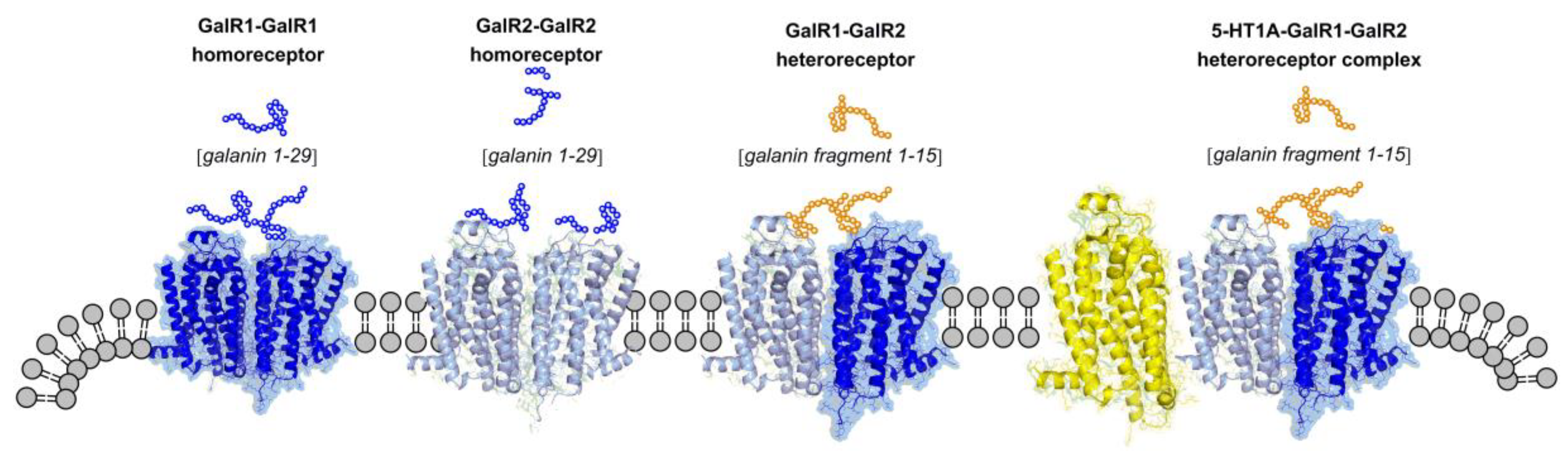 Molecules | Free Full-Text | Receptor–Receptor Interactions in