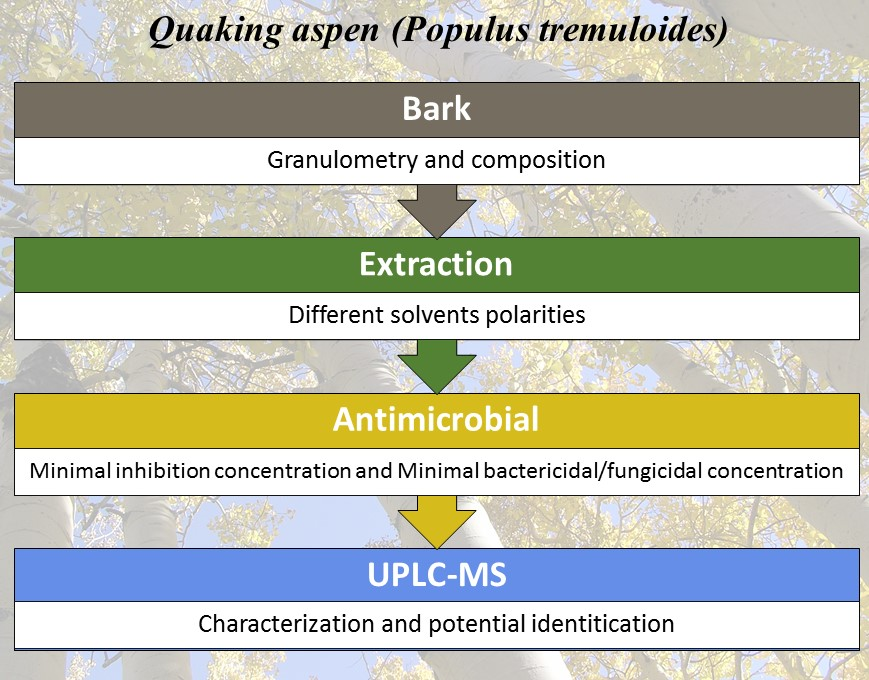 Molecules | Free Full-Text | Phytochemical Screening of Quaking