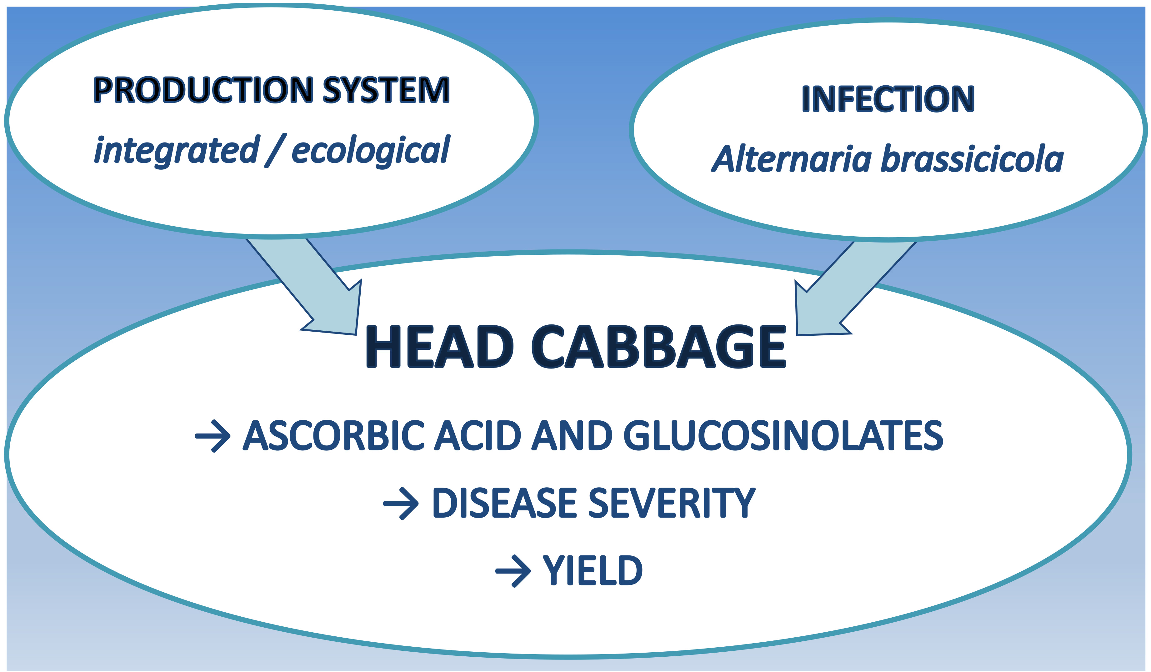 Molecules Free Full Text Ascorbic Acid And Glucosinolate Levels In New Czech Cabbage Cultivars Effect Of Production System And Fungal Infection Html