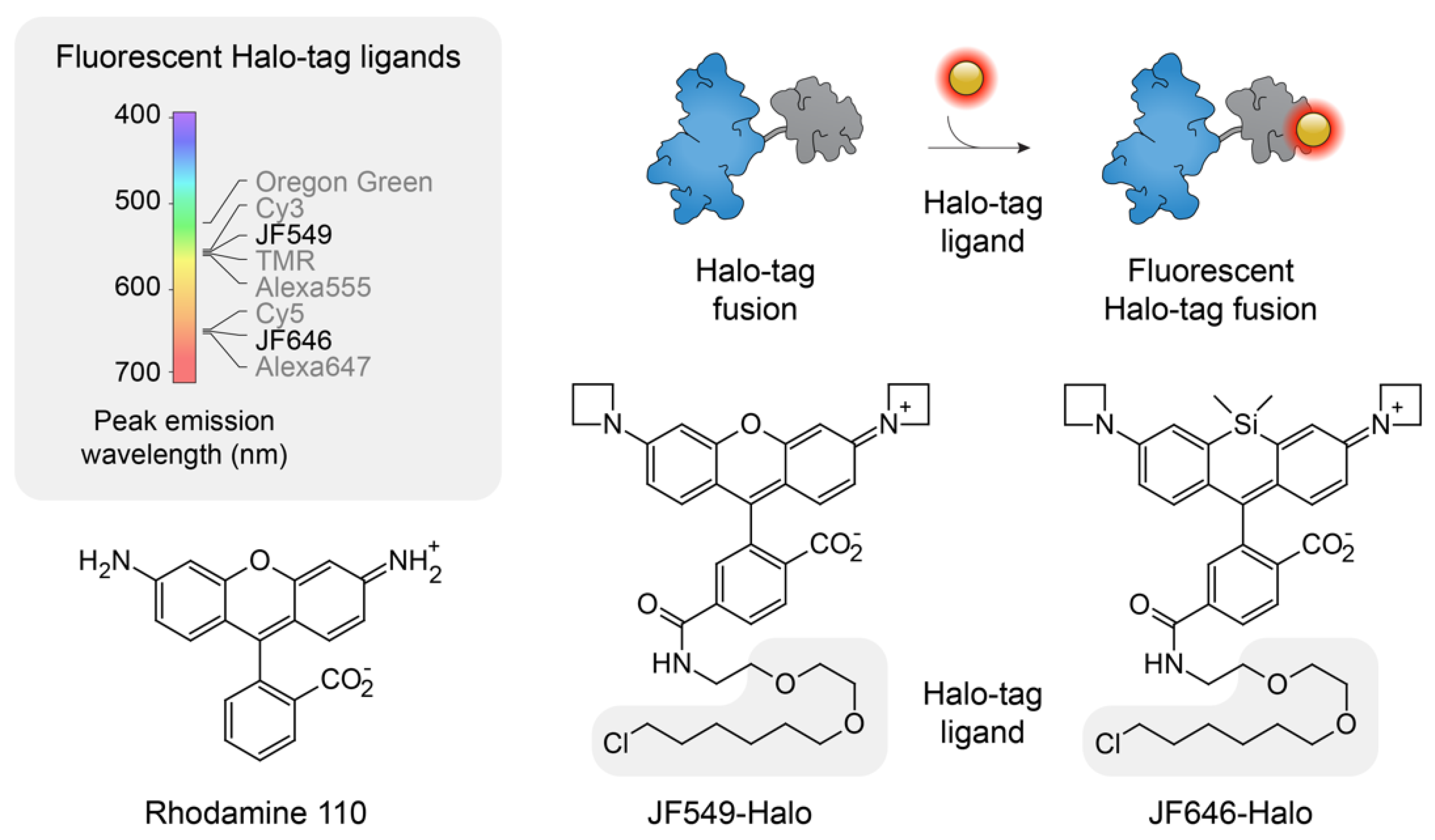 Molecules | Free Full-Text | Next-Generation Drugs and