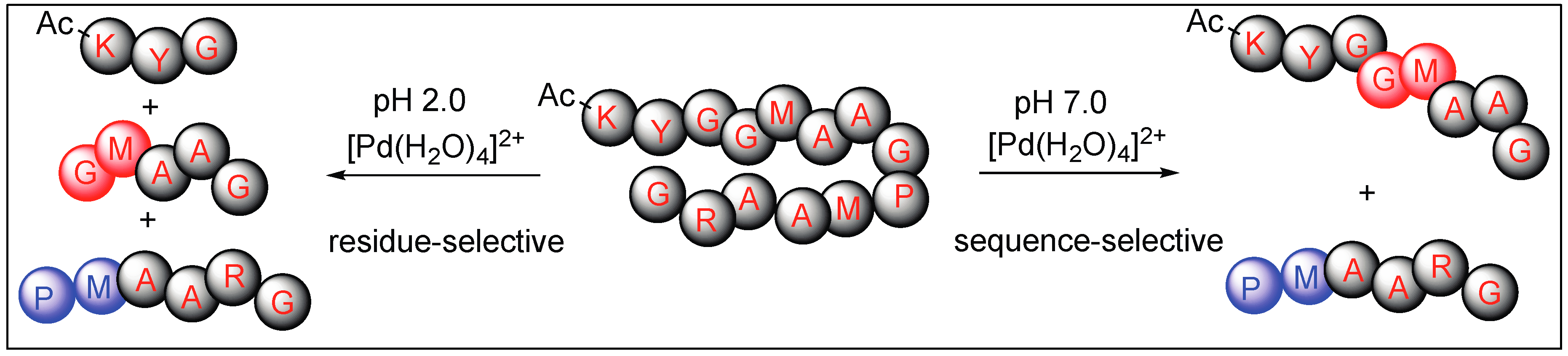 Molecules | Free Full-Text | Amide Bond Activation of