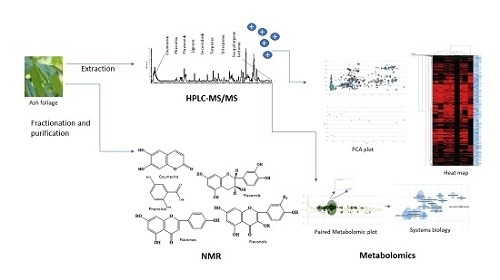 Molecules | Free Full-Text | A Metabolomic and HPLC-MS/MS Analysis