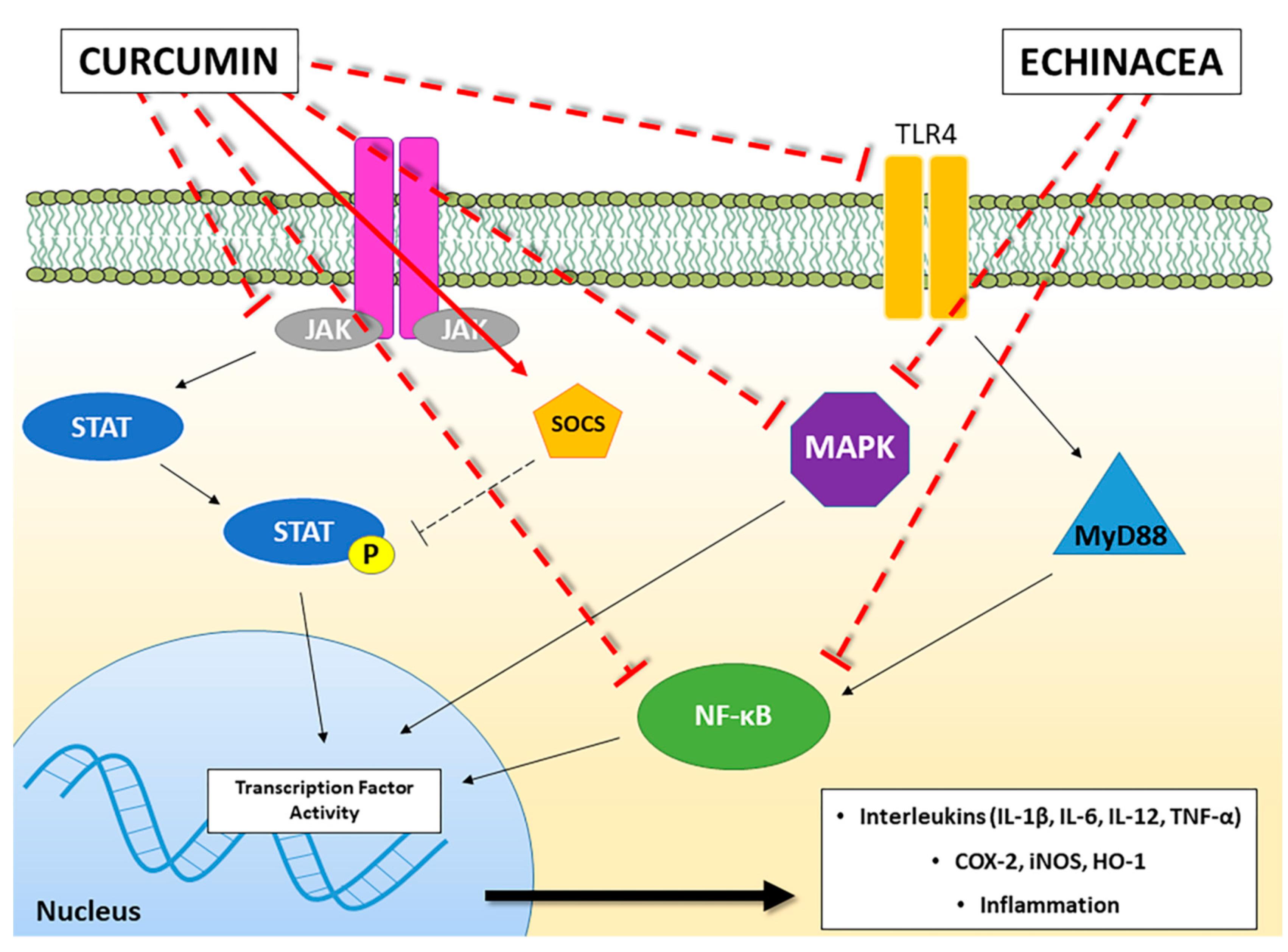 Molecules | Free Full-Text | Immunomodulators Inspired by