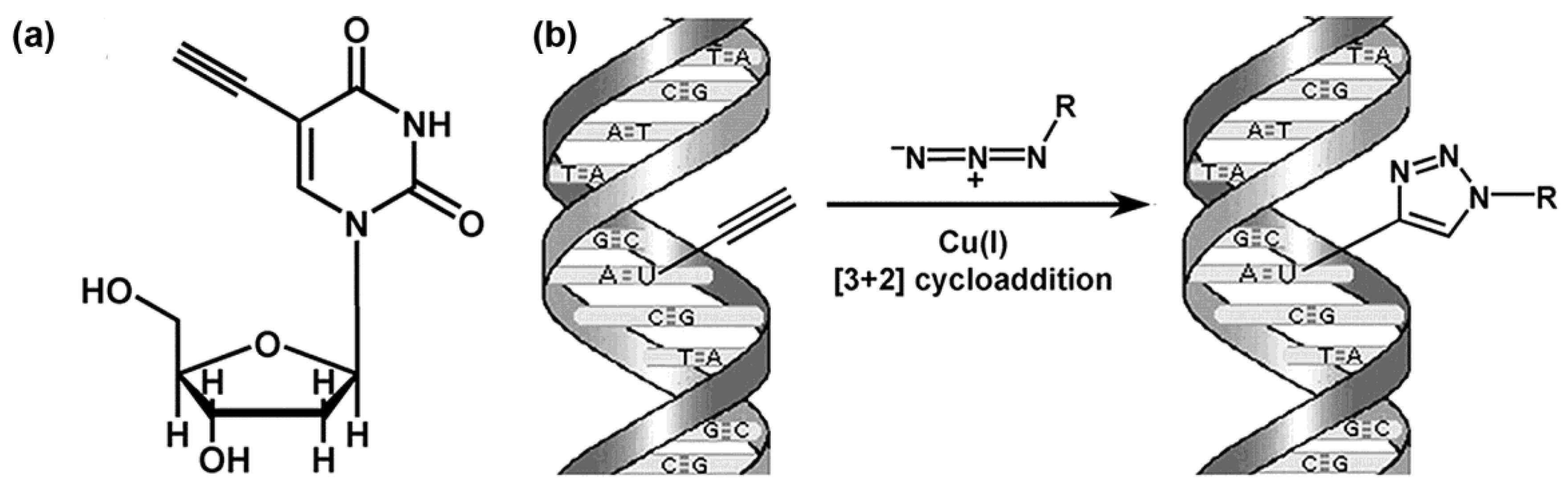 Molecules | Free Full-Text | DNA Replication: From