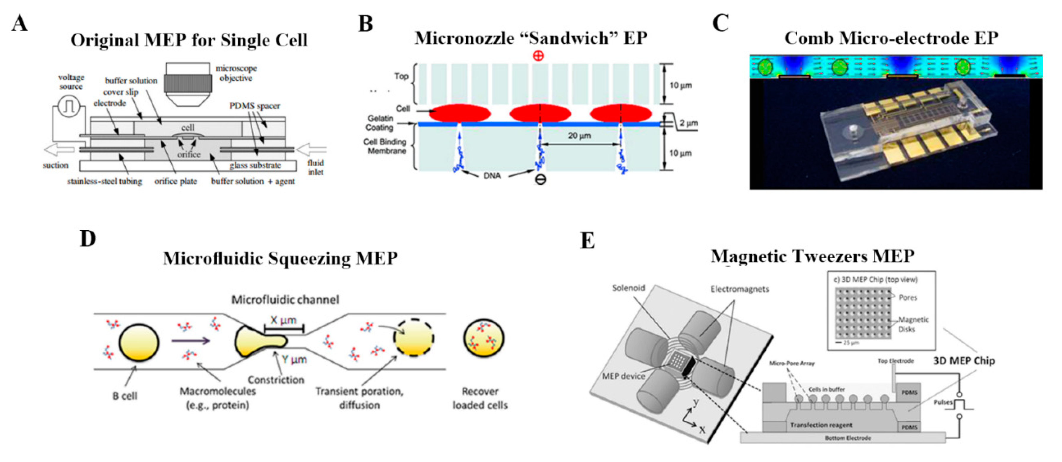 Molecules Free Full Text A Review On Electroporation Based