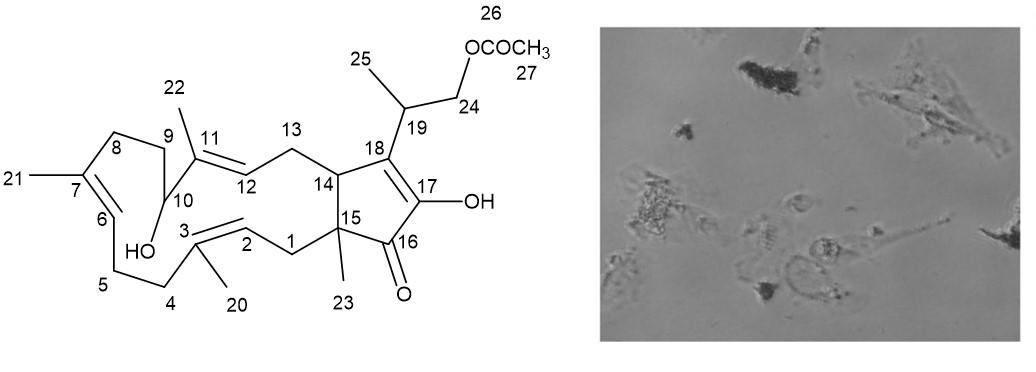 Molecules | Free Full-Text | Fusaproliferin, a Fungal