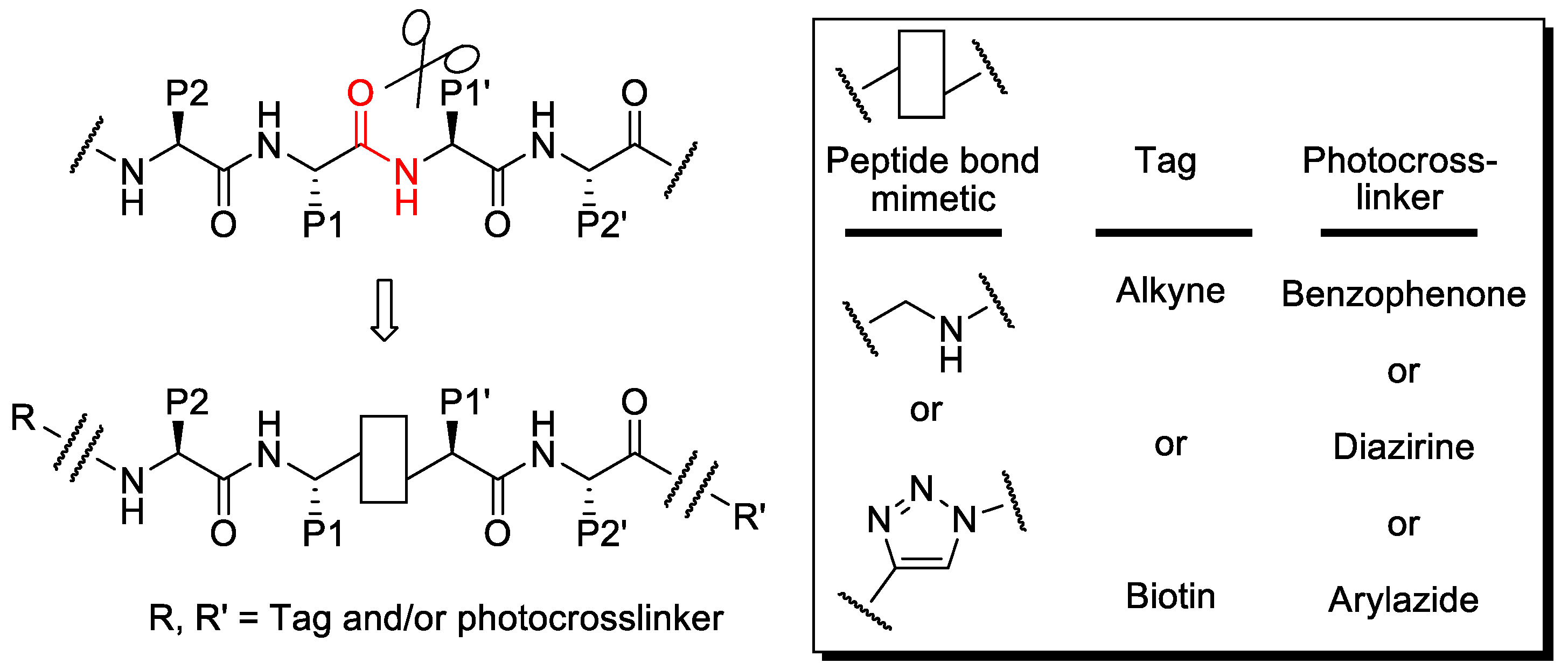 install diagram peptide bond formation