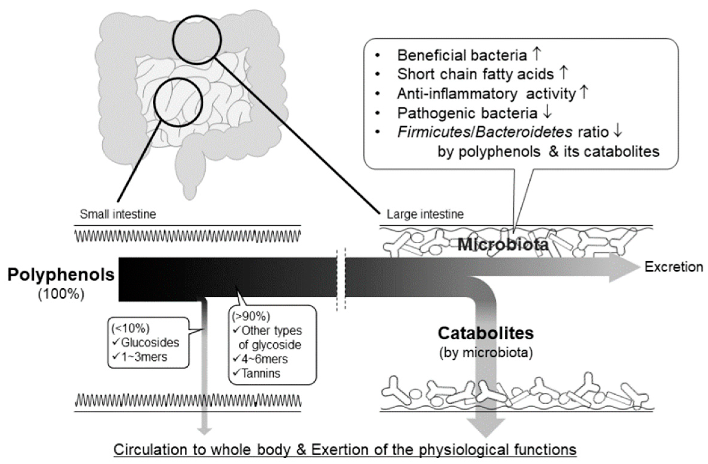 Molecules | Free Full-Text | Role of Intestinal Microbiota in the ...