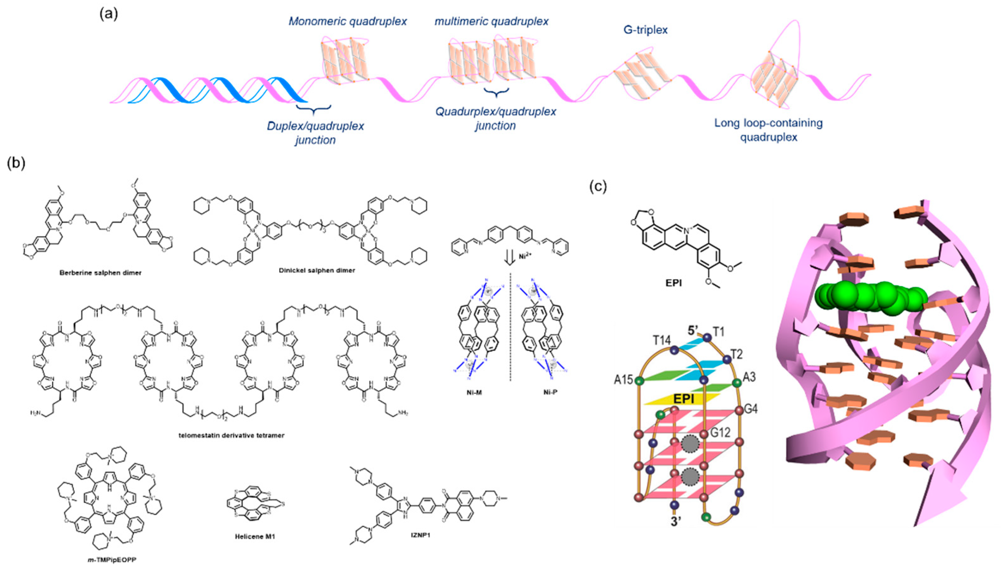 Molecules | Free Full-Text | Recent Progress of Targeted G