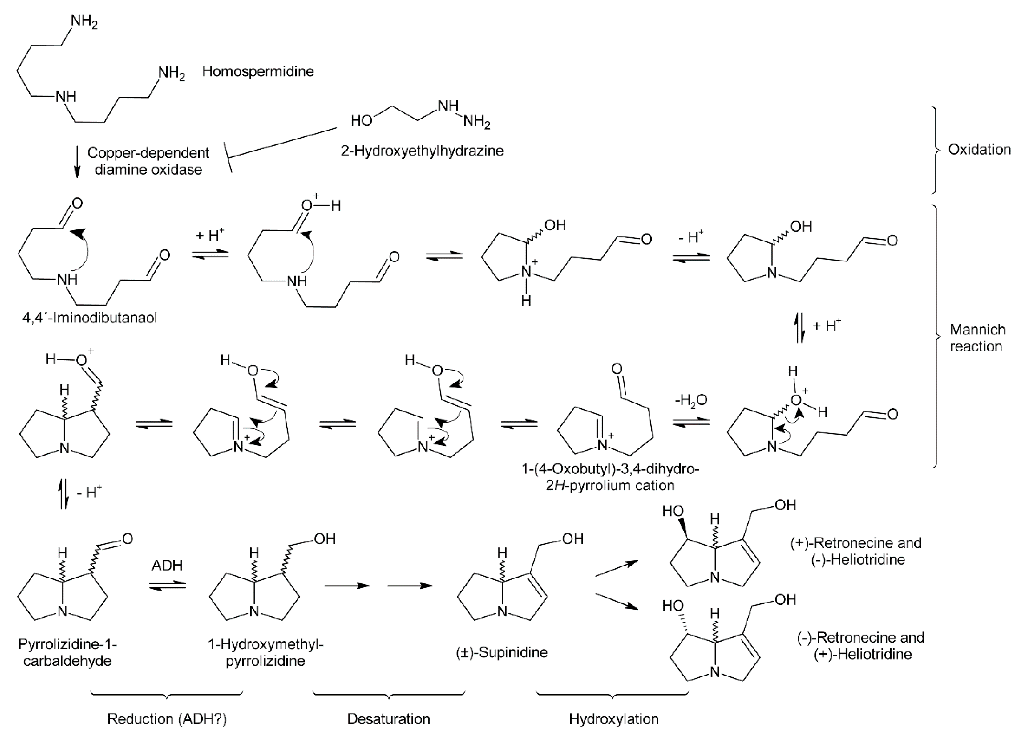 Alkaloids : biosynthesis, biological roles and health benefits