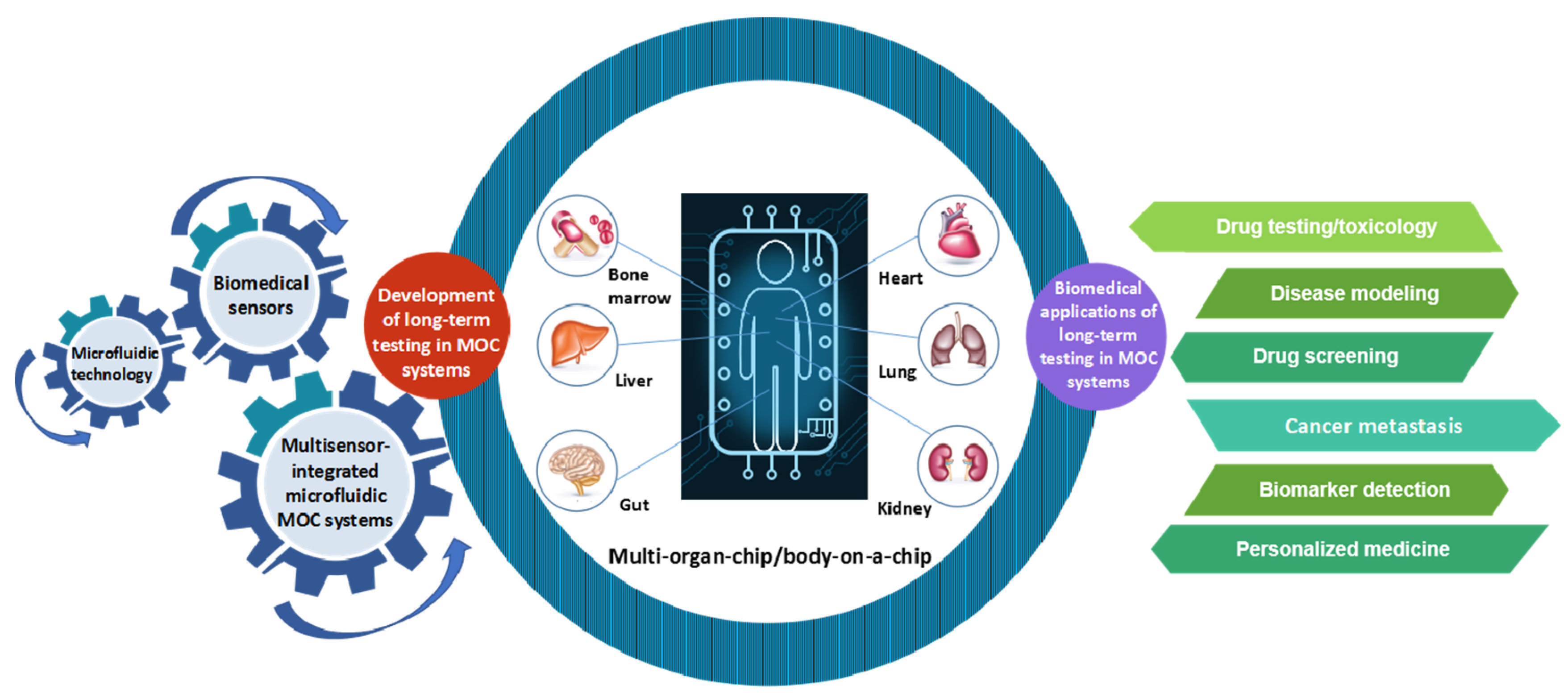 Molecules | Free Full-Text | Multi-Organs-on-Chips: Towards Long