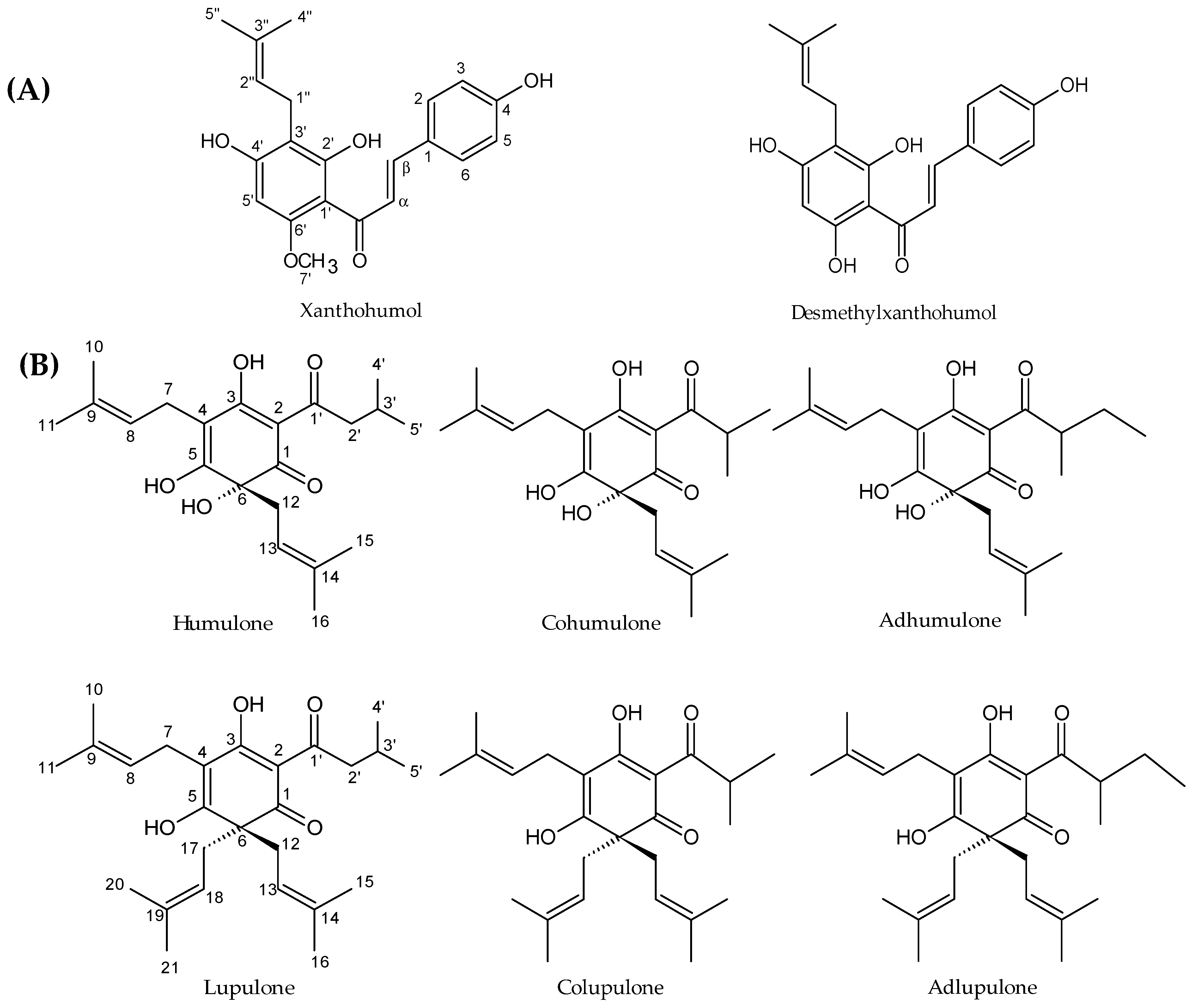 Molecules | Free Full-Text | Phenolic Compounds from Humulus