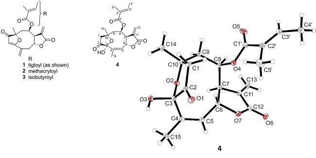 C2 C5 Diagram