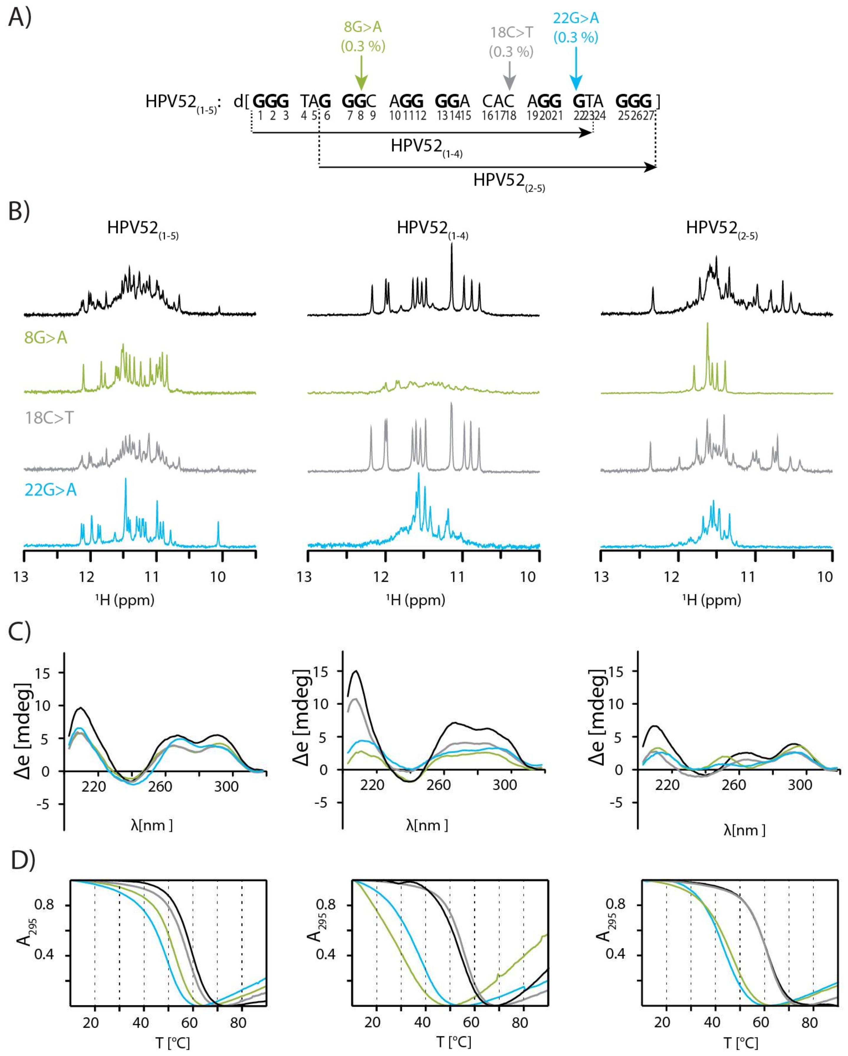 human papillomavirus g quadruplexes după electrocoagularea papilomului