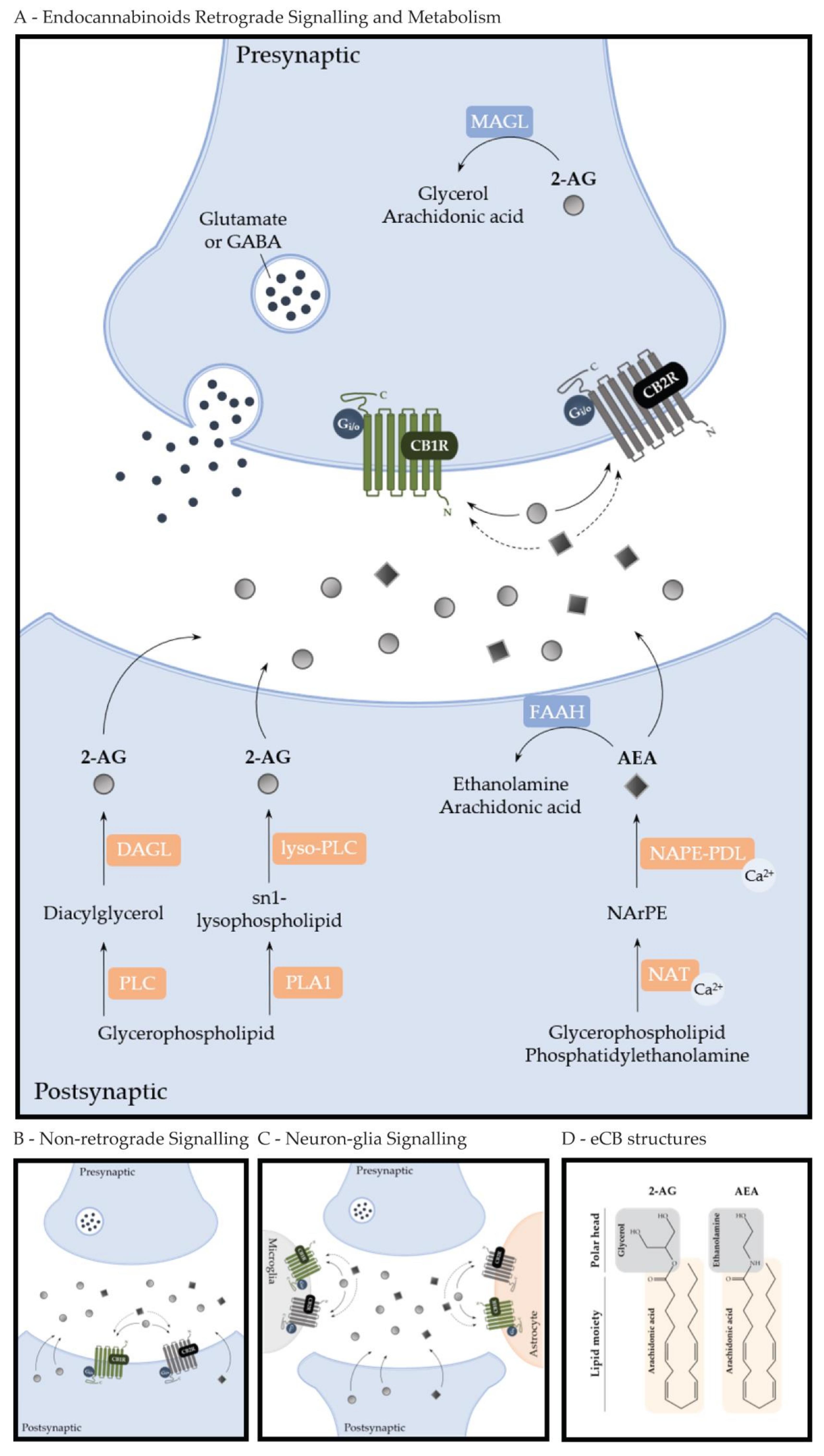 munro smart box wiring diagram molecules free full text cannabinoid actions on neural stem  cannabinoid actions on neural stem