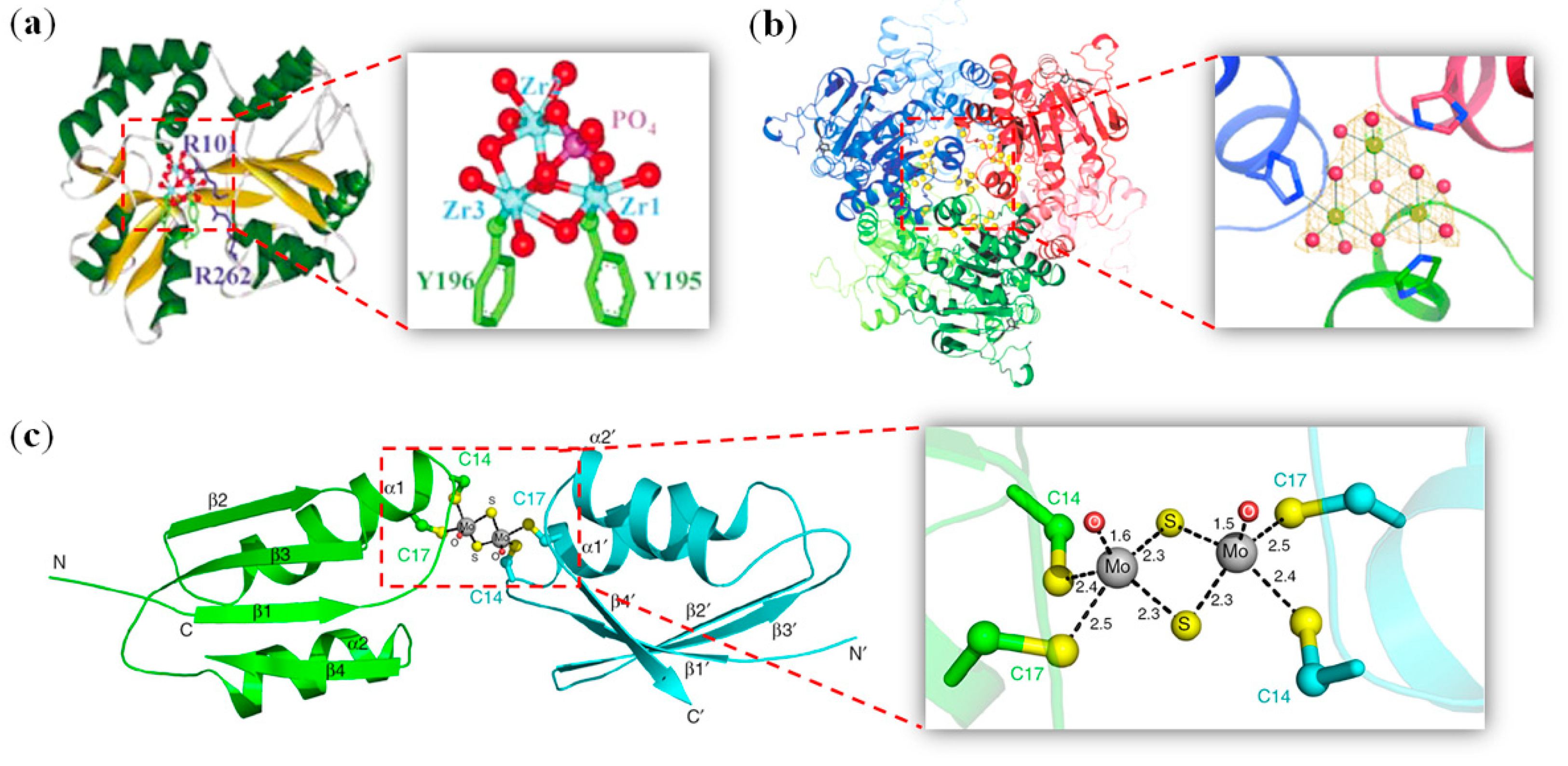 Metalloproteins: Structural Aspects