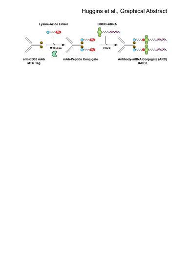 Molecules | Free Full-Text | Site Selective Antibody