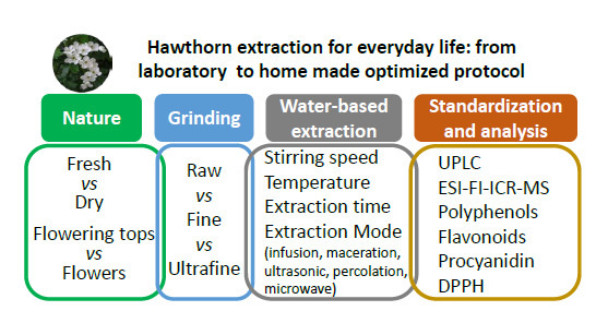 Molecules Free Full Text Optimizing Water Based Extraction Of Bioactive Principles Of Hawthorn From Experimental Laboratory Research To Homemade Preparations Html