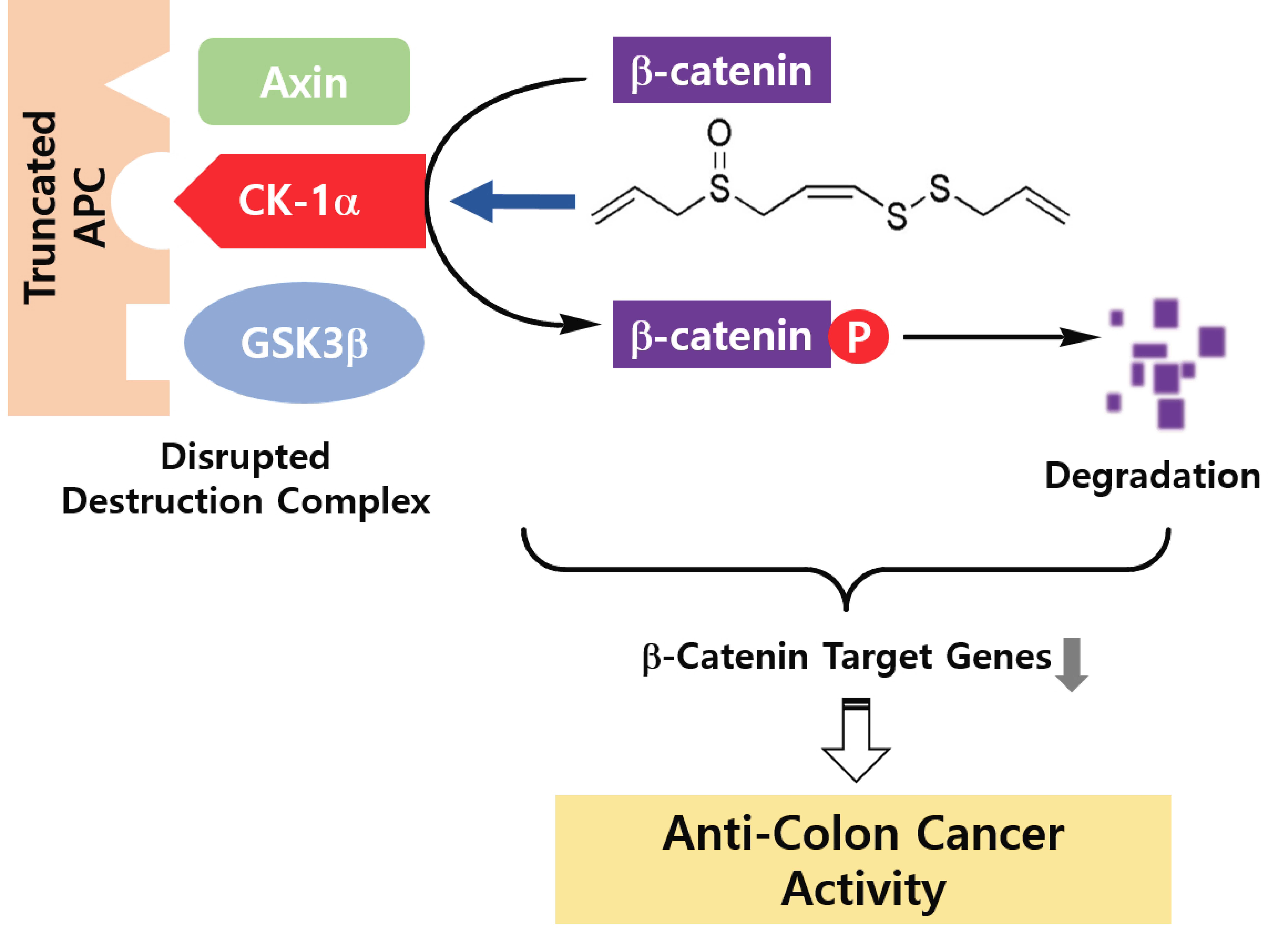 Molecules Free Full Text Z Ajoene Inhibits Growth Of Colon Cancer By Promotion Of Ck1a Dependent B Catenin Phosphorylation Html