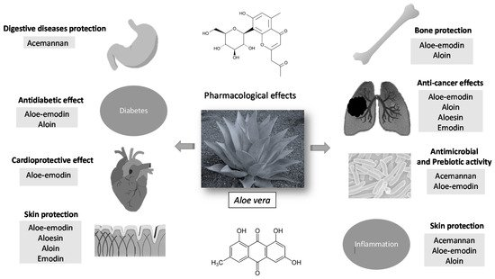 Molecules Free Full Text Pharmacological Update Properties Of Aloe Vera And Its Major Active Constituents Html
