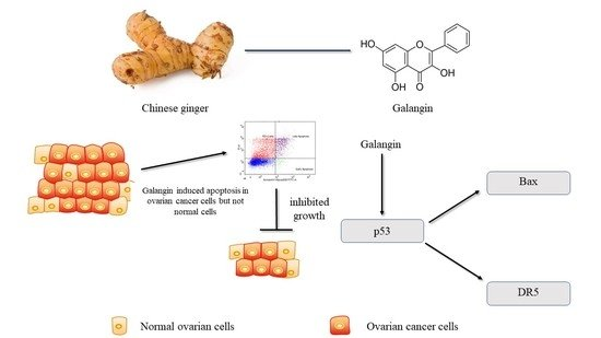 Molecules Free Full Text Galangin A Flavonoid From Lesser Galangal Induced Apoptosis Via P53 Dependent Pathway In Ovarian Cancer Cells