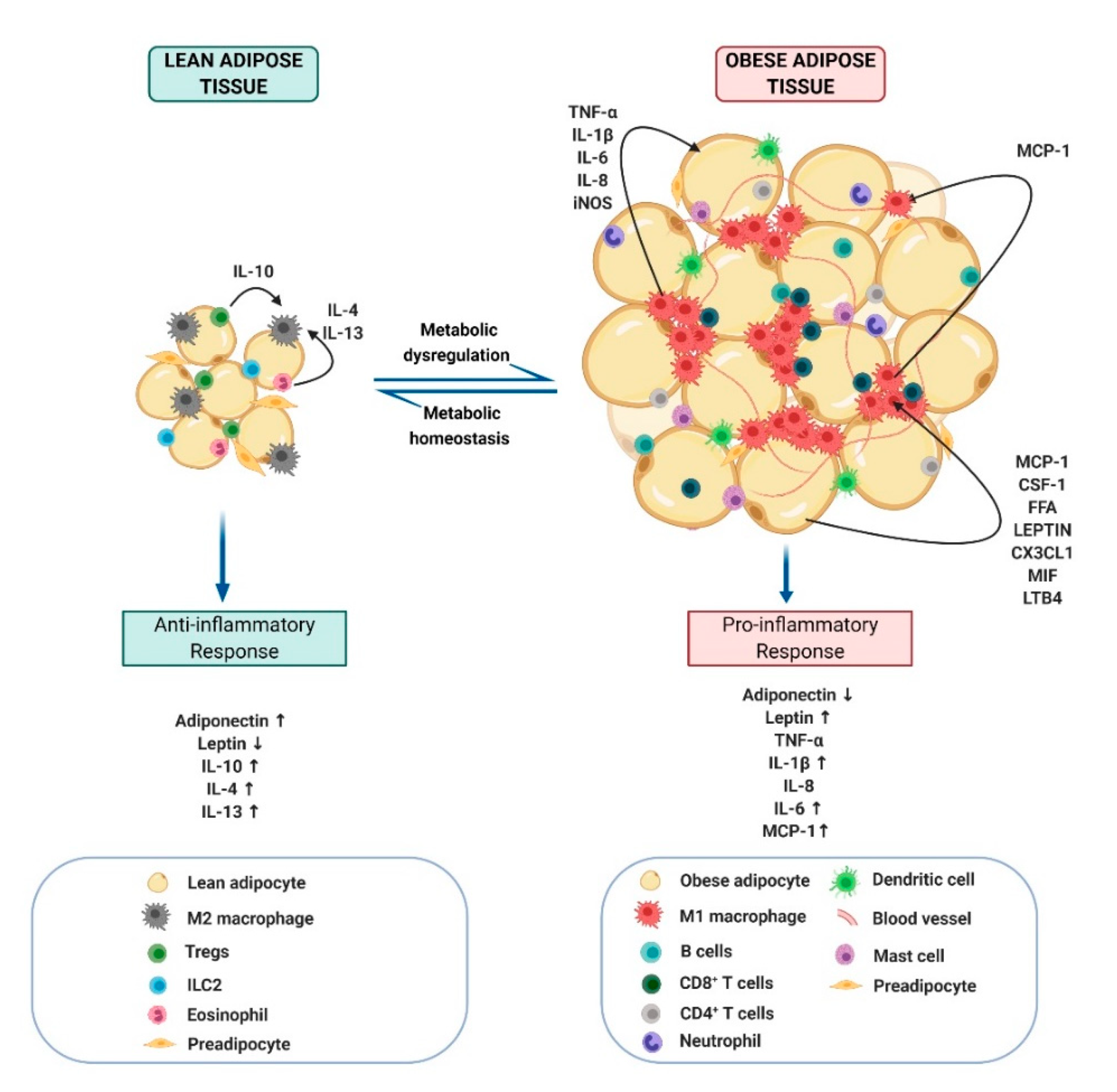 Molecules Free Full Text The Targeted Impact Of Flavones On Obesity Induced Inflammation And The Potential Synergistic Role In Cancer And The Gut Microbiota Html