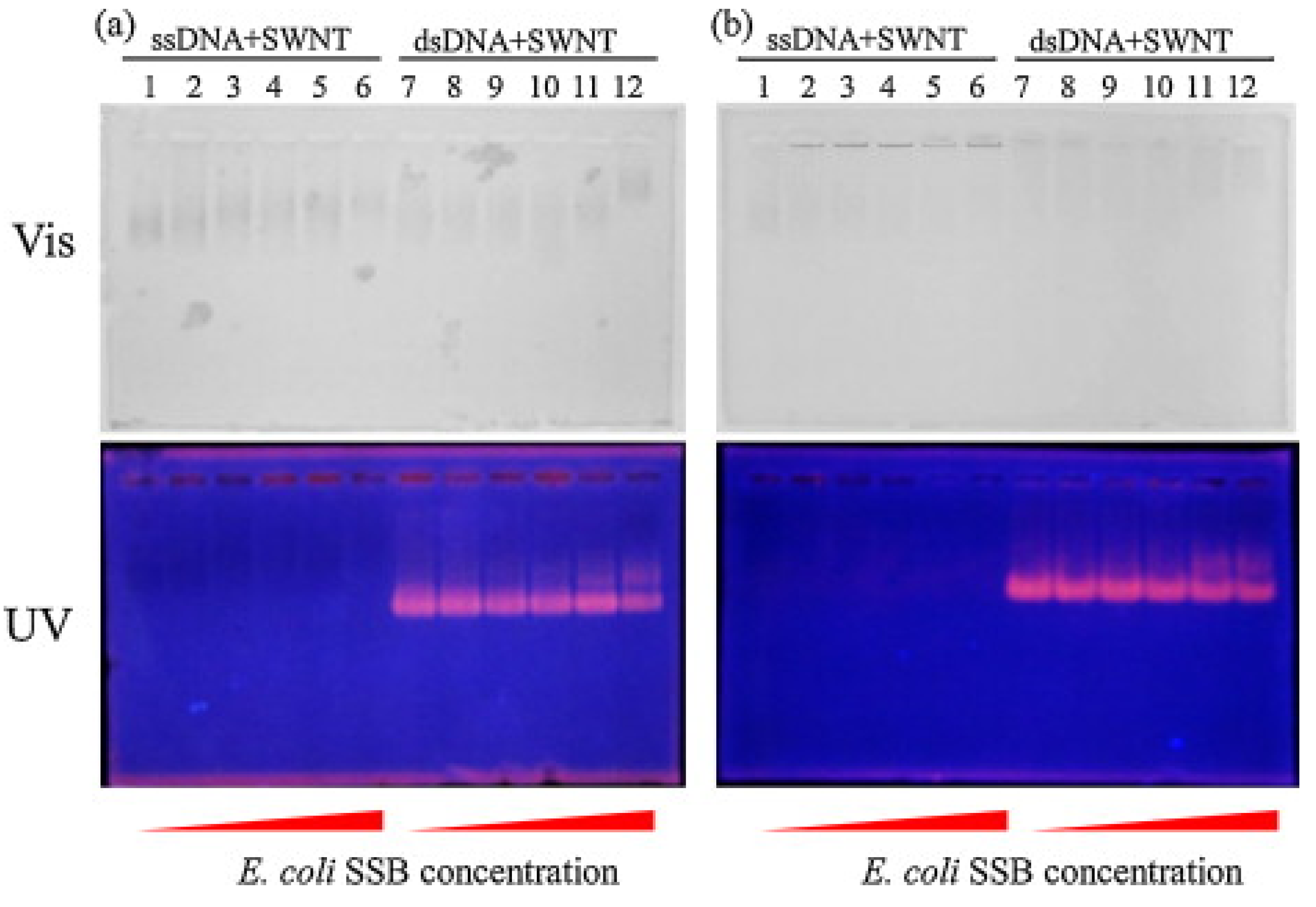 dna research papers full text Cgas conducts micronuclei dna surveillance a collection of four papers now reveals that micronuclear dna is a new cell intrinsic full text | full.