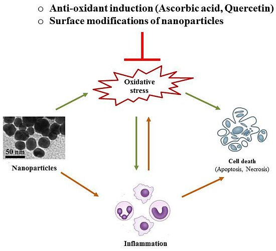 Nanotoxicity: An Interplay of Oxidative Stress, Inflammation and Cell Death