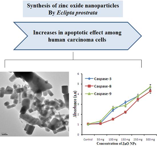 Purchase a research paper zinc oxide nanoparticles