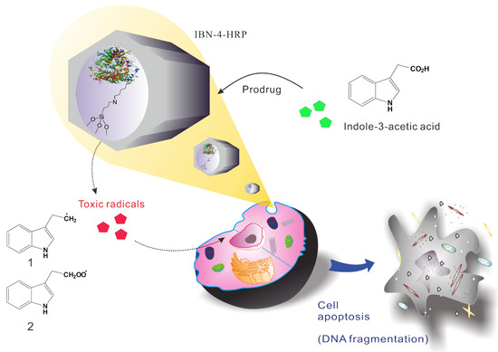 Utilization of Enzyme-Immobilized Mesoporous Silica Nanocontainers IBN-4 in Prodrug-Activated Cancer Theranostics