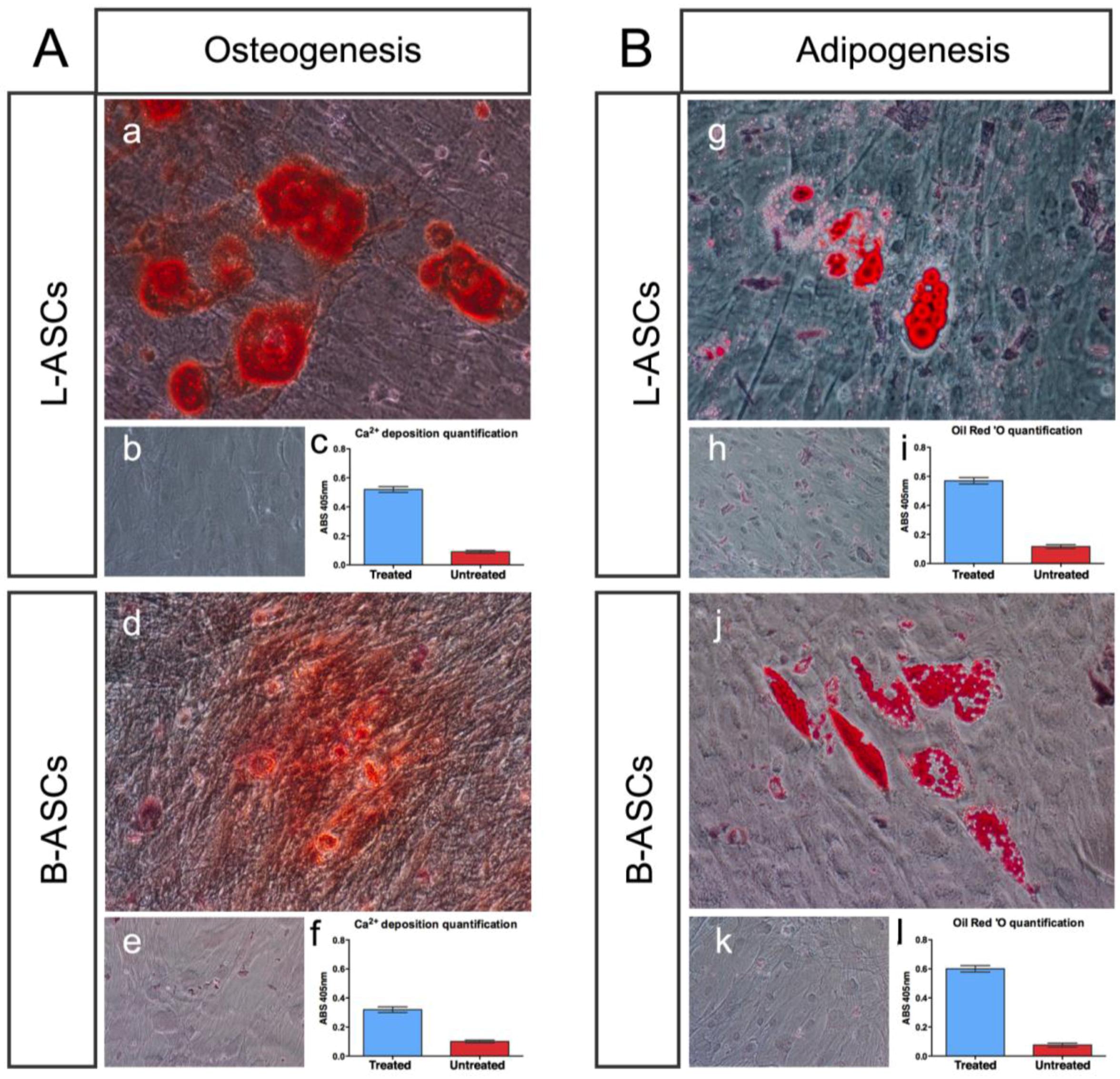 (PDF) Nanotechnology for regenerative medicine