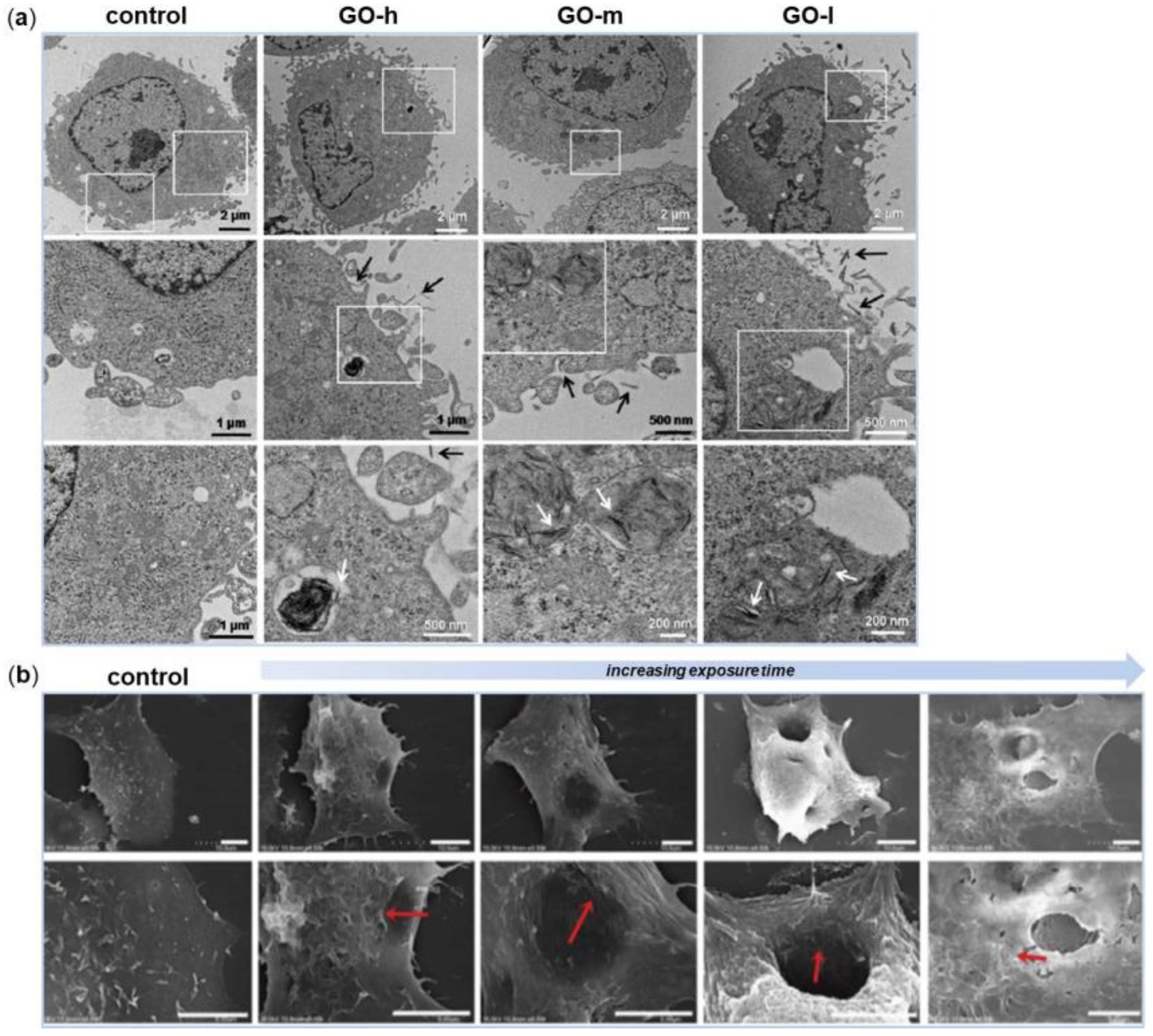Nanomaterials Free Full Text Graphene Based For 3d Plant Cell Diagram 8 Grade Image Galleries Imagekbcom 08 00349 G002