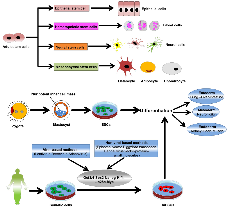 Nanomaterials | Free Full-Text | Nano-Biosensor for