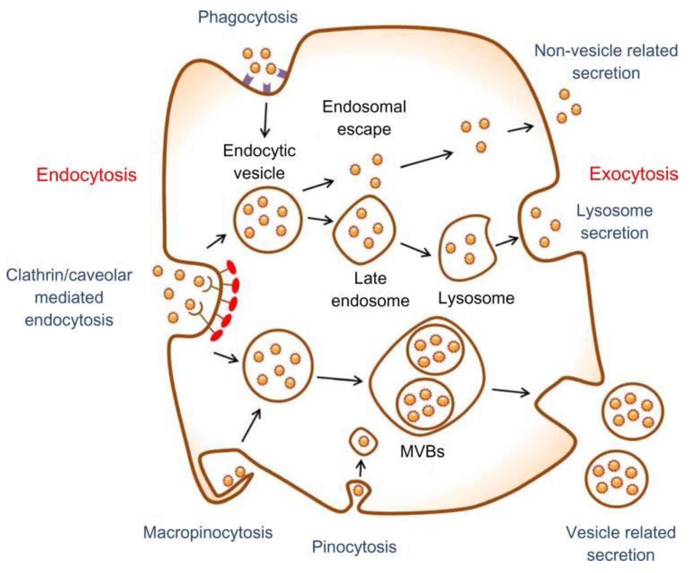 Nanomaterials | Free Full-Text | Vascular Wall-Mesenchymal