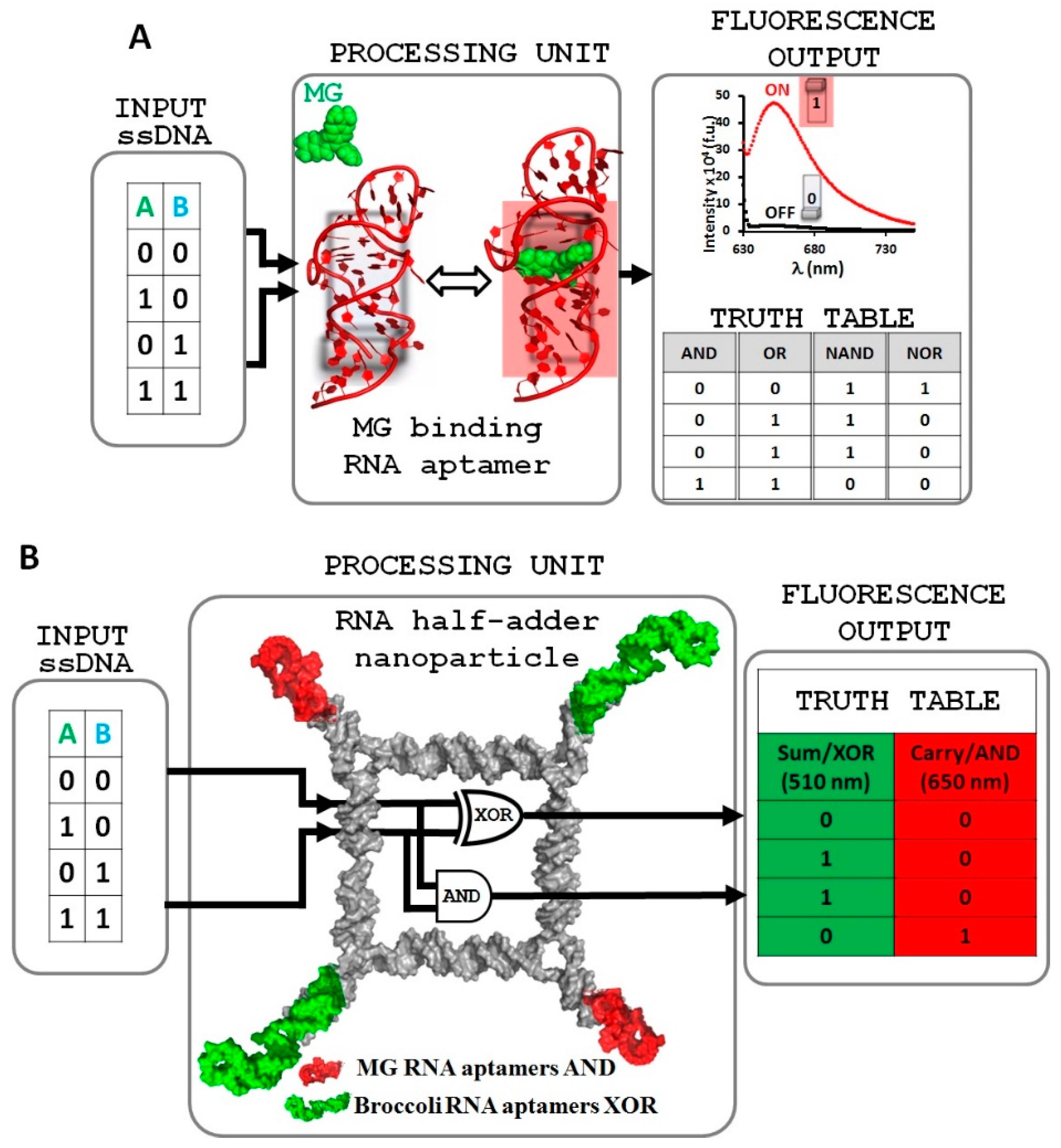Nanomaterials Free Full Text Fluorogenic Rna Aptamers A Nano Basic Halfadder And Fulladder Circuits The Rightclick Menu Of 08 00984 G001