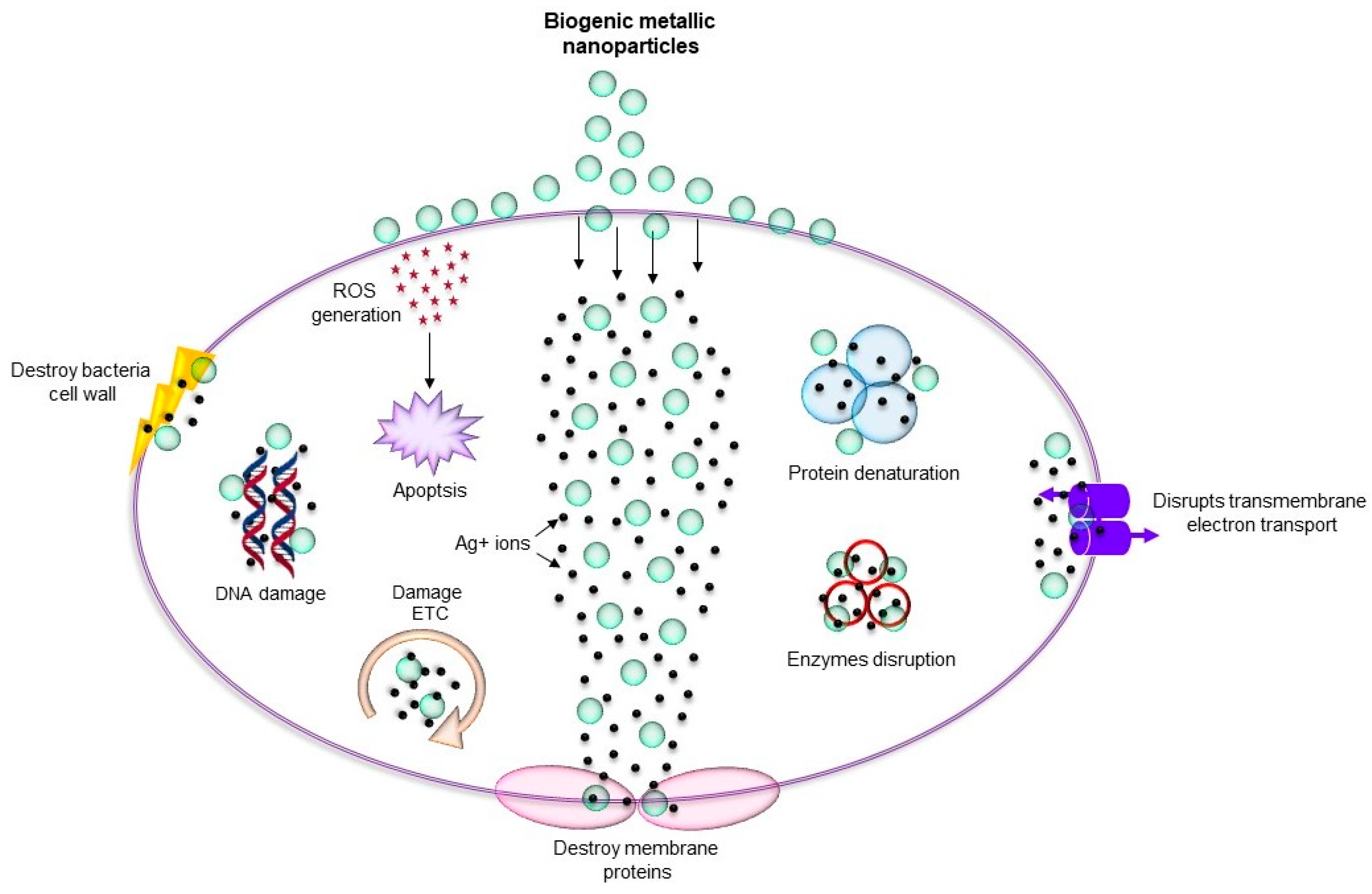 Nanomaterials | Free Full-Text | Antimicrobial Effects of Biogenic