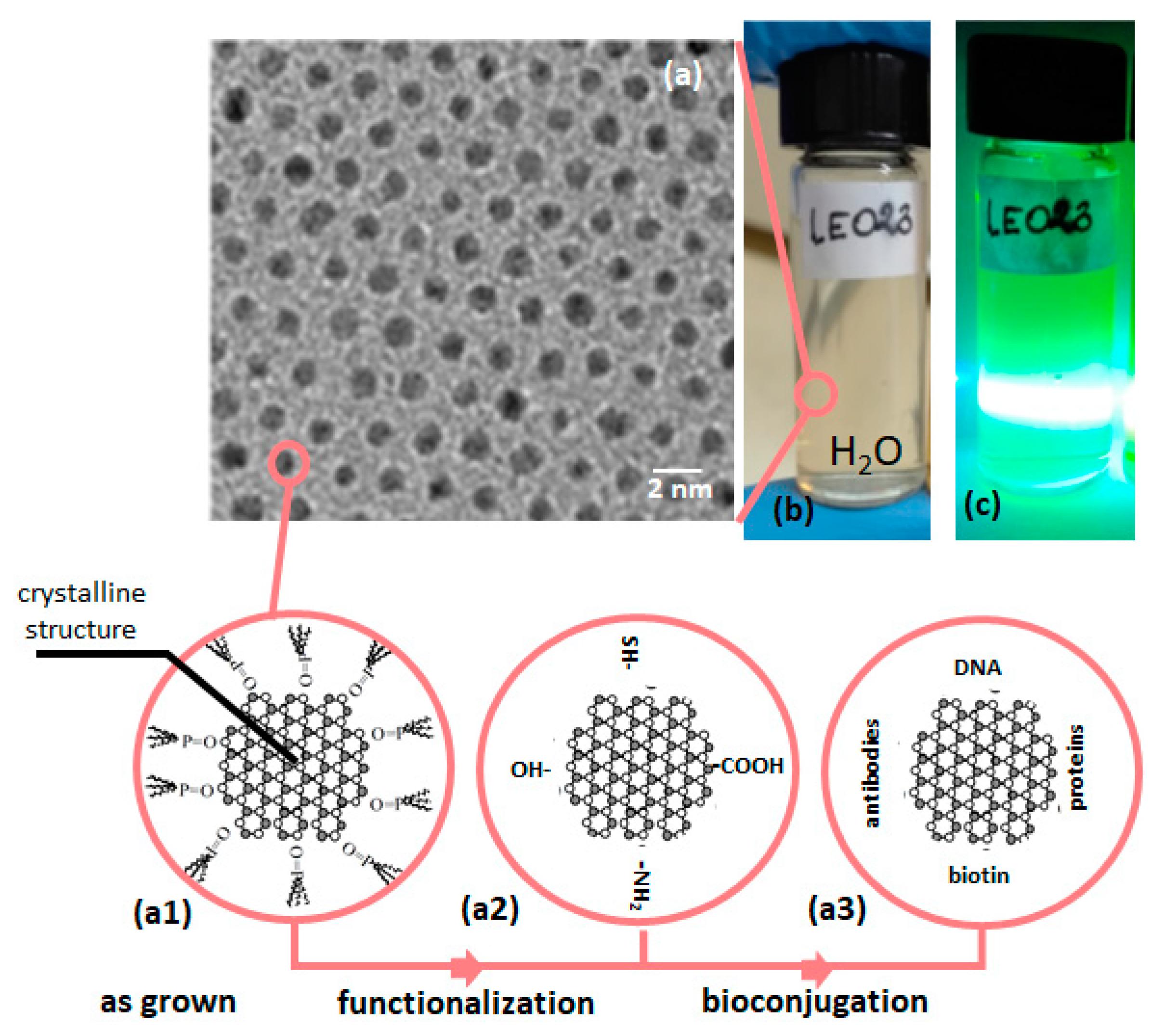 nanomaterials free full text optical sensors based on ii vi