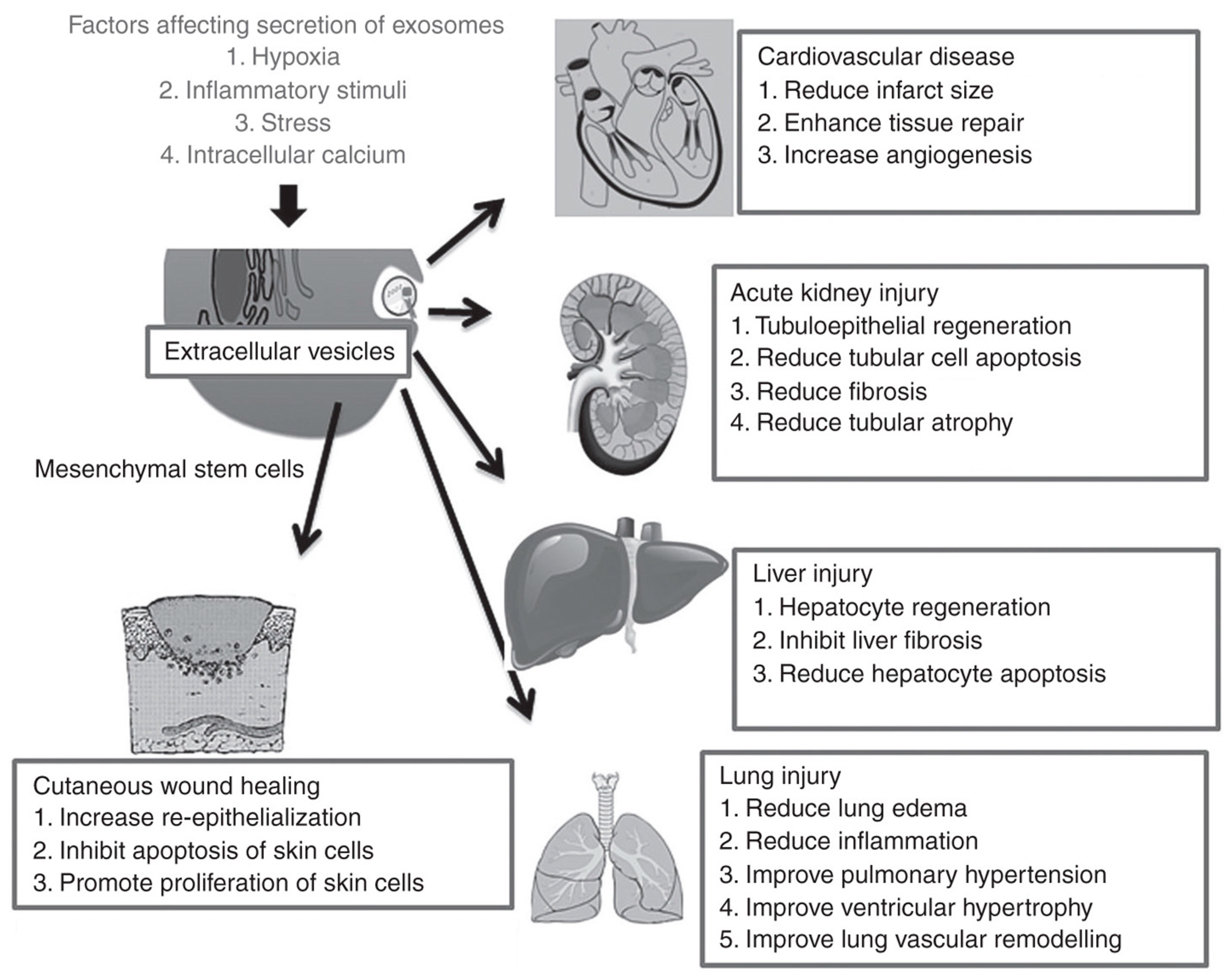 Frontiers | Nanomaterials in Targeting Cancer Stem Cells